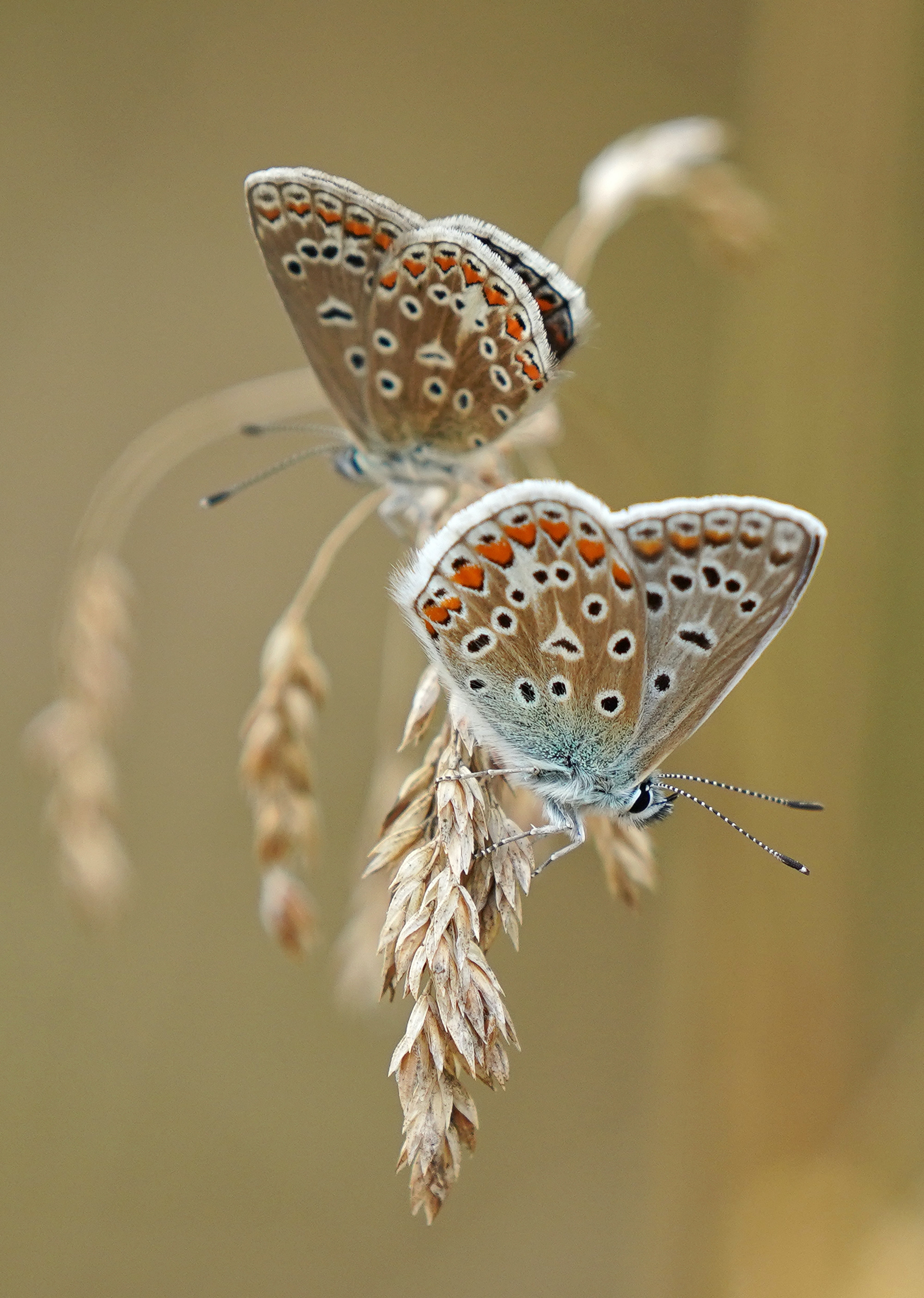 90449 download wallpaper Animals, Butterflies, Wings, Ears, Spikes, Macro screensavers and pictures for free
