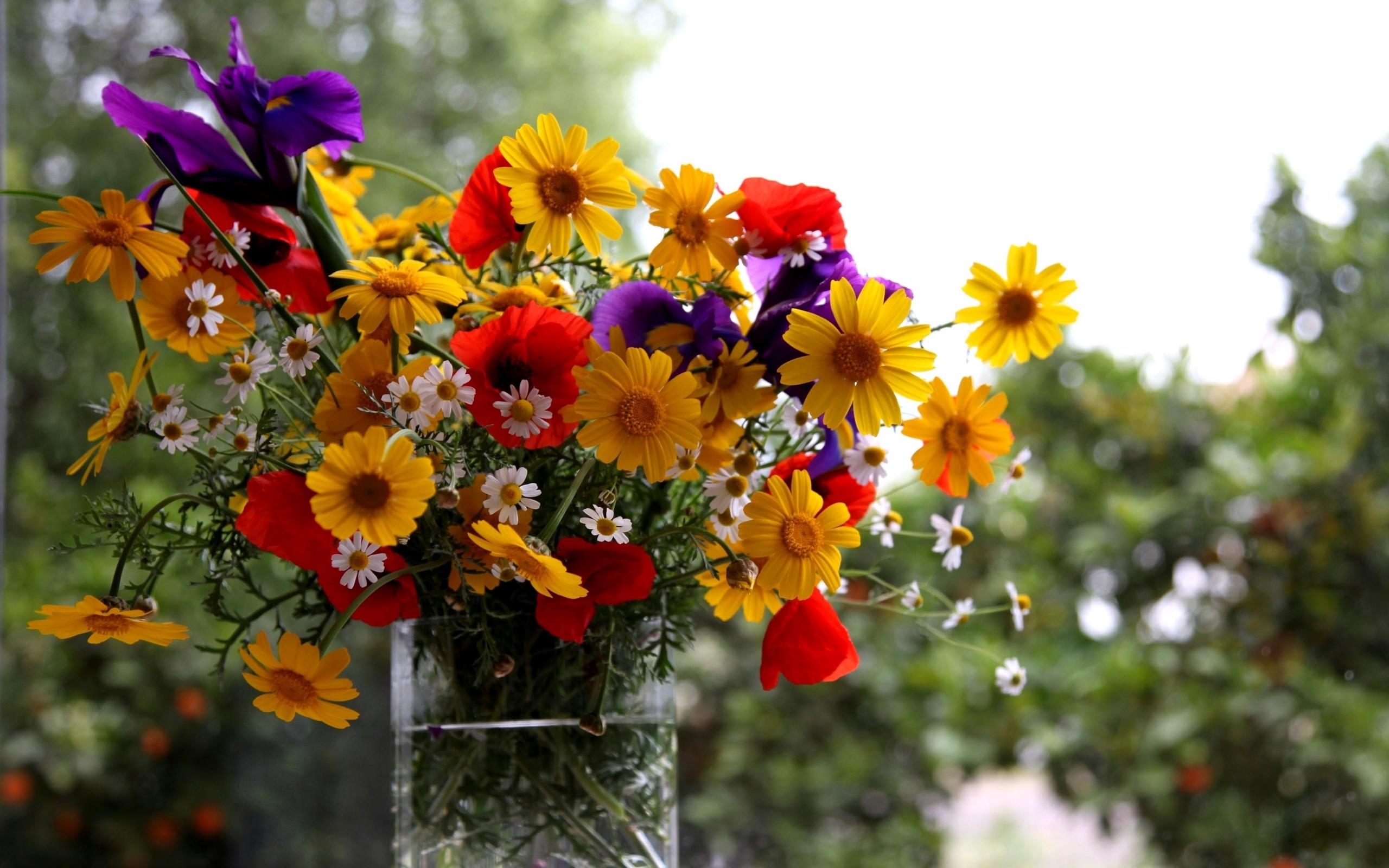 49651 скачать обои Растения, Цветы, Букеты - заставки и картинки бесплатно
