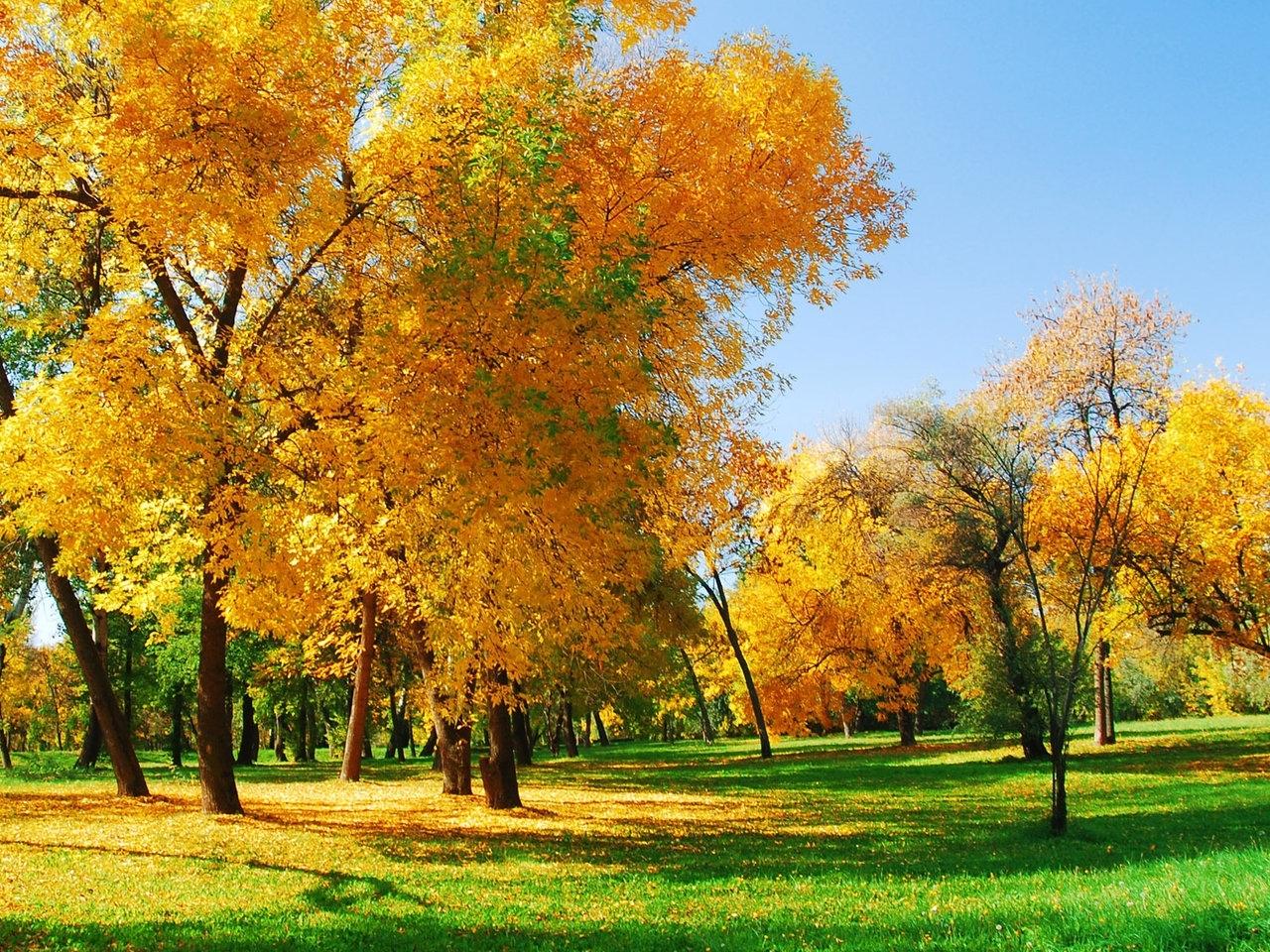 50218 скачать обои Пейзаж, Природа, Деревья, Осень - заставки и картинки бесплатно