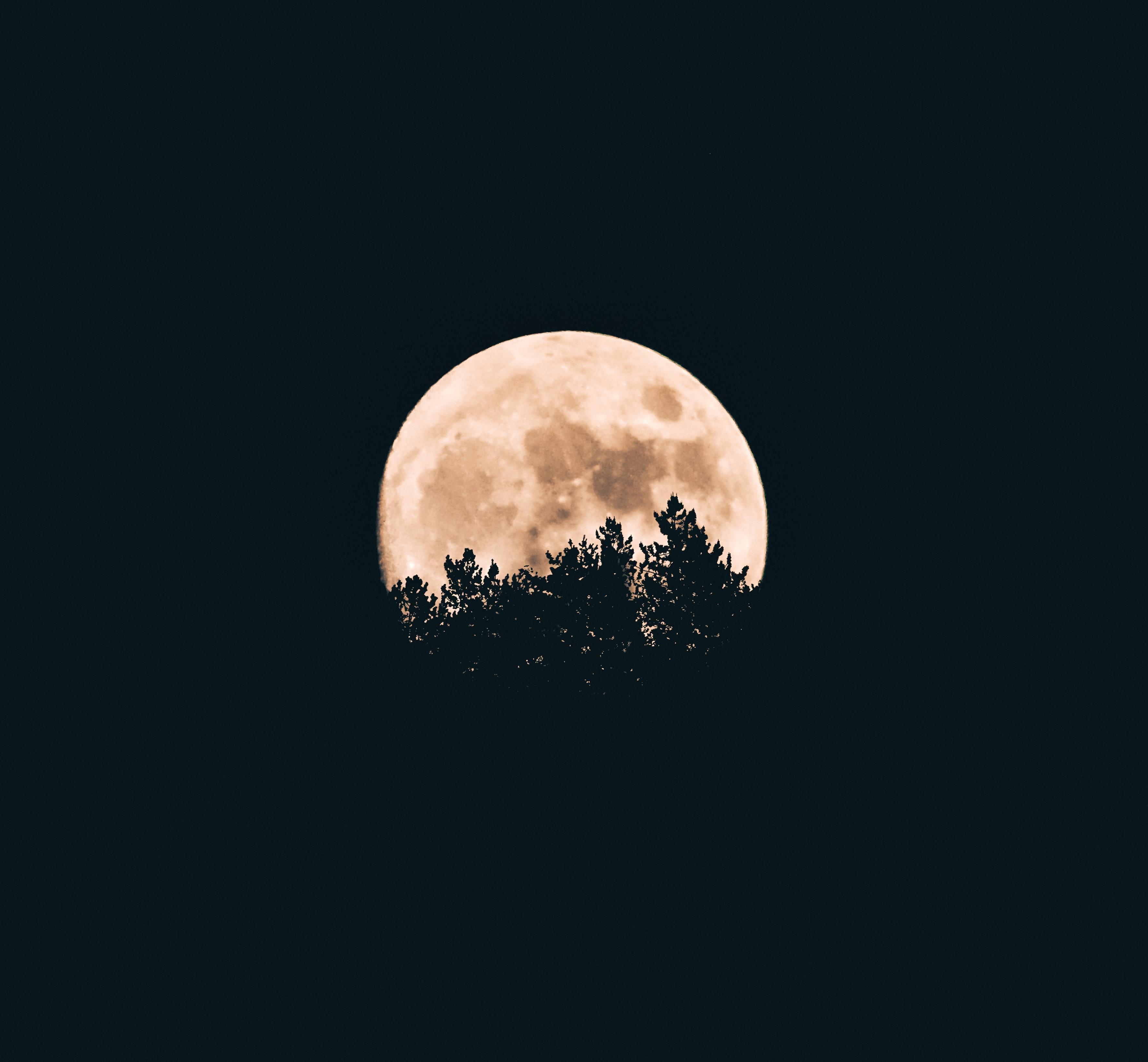 68194 Protetores de tela e papéis de parede Lua em seu telefone. Baixe Lua, Árvores, Noite, Escuro fotos gratuitamente