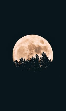 68194 Screensavers and Wallpapers Dark for phone. Download Moon, Trees, Dark, Night pictures for free