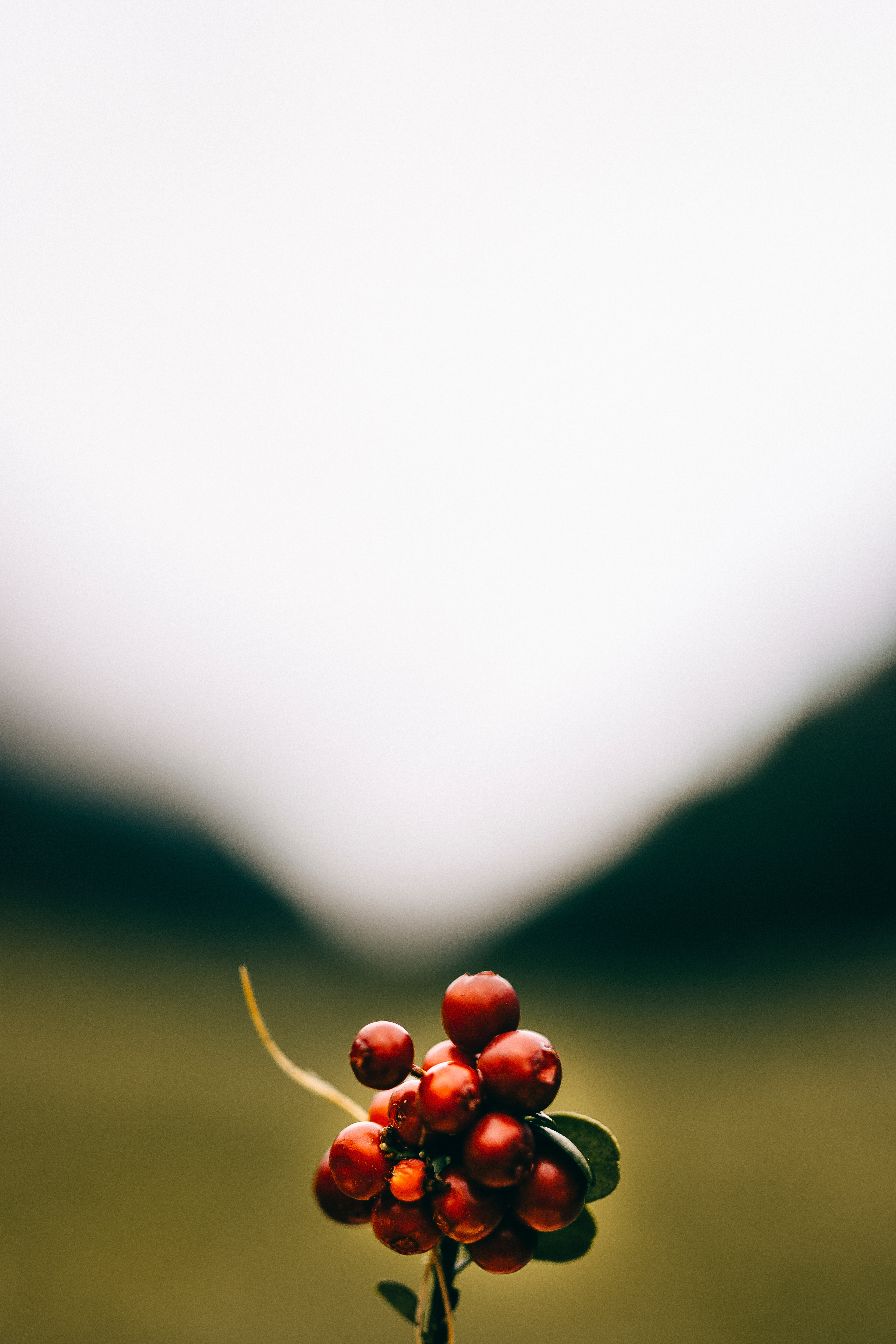 139482 download wallpaper Macro, Cranberry, Bunch, Berries screensavers and pictures for free