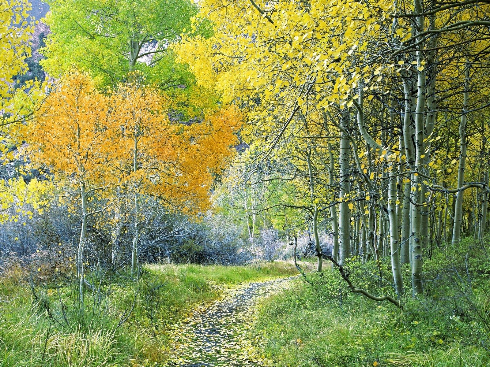Скачать картинку Растения, Пейзаж, Природа, Деревья, Дороги в телефон бесплатно.