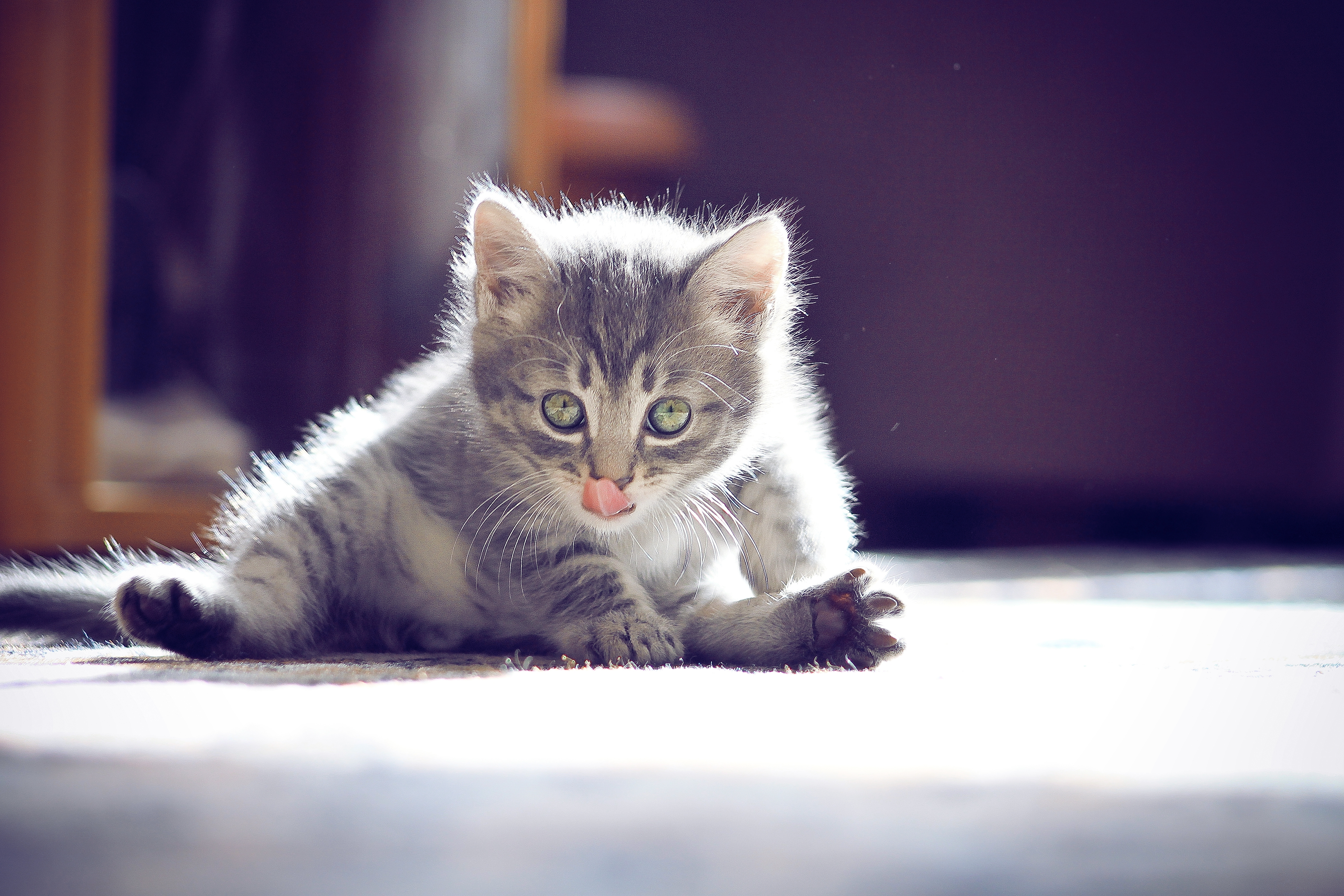 66755 download wallpaper Animals, Kitty, Kitten, Muzzle, Language, Tongue, Sit, Nice, Sweetheart screensavers and pictures for free