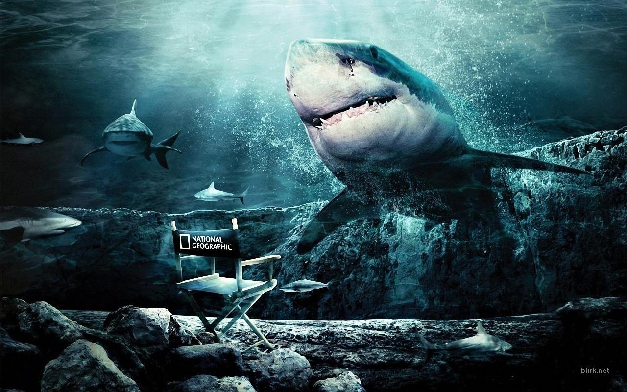 19398 Заставки и Обои Рыбы на телефон. Скачать Рыбы, Акулы, Животные, Море картинки бесплатно
