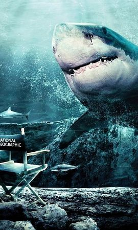 19398 download wallpaper Animals, Sea, Sharks, Fishes screensavers and pictures for free