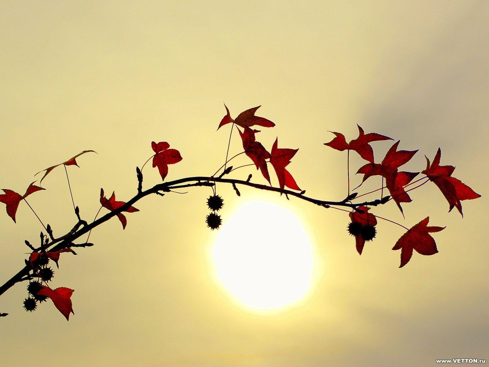 Скачать картинку Солнце, Листья, Растения в телефон бесплатно.
