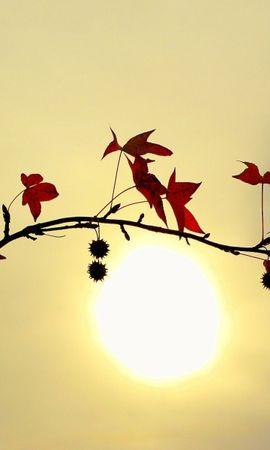 5496 скачать обои Растения, Листья, Солнце - заставки и картинки бесплатно