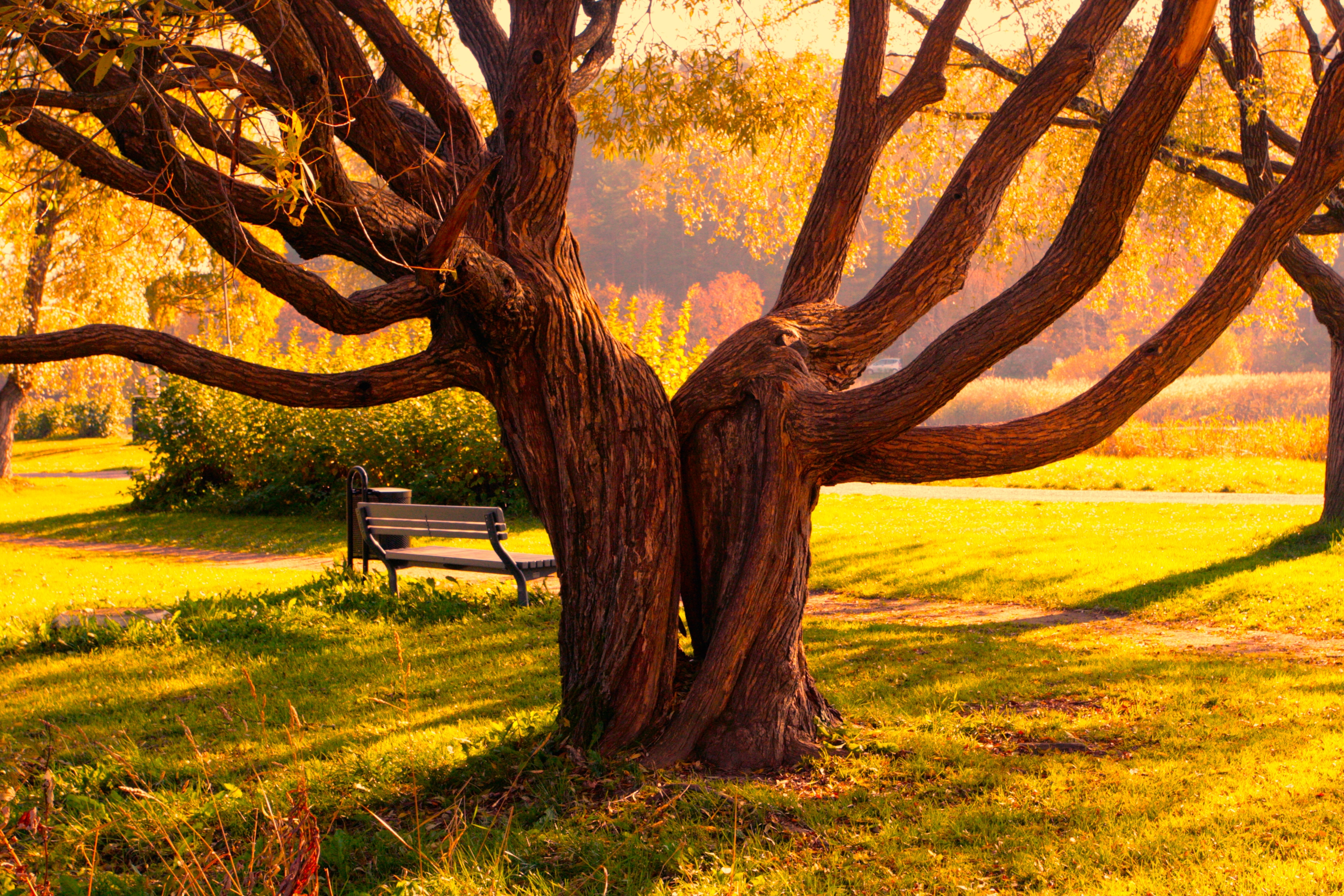 62841 Screensavers and Wallpapers Bench for phone. Download Bench, Nature, Wood, Tree, Plexus, Halves pictures for free