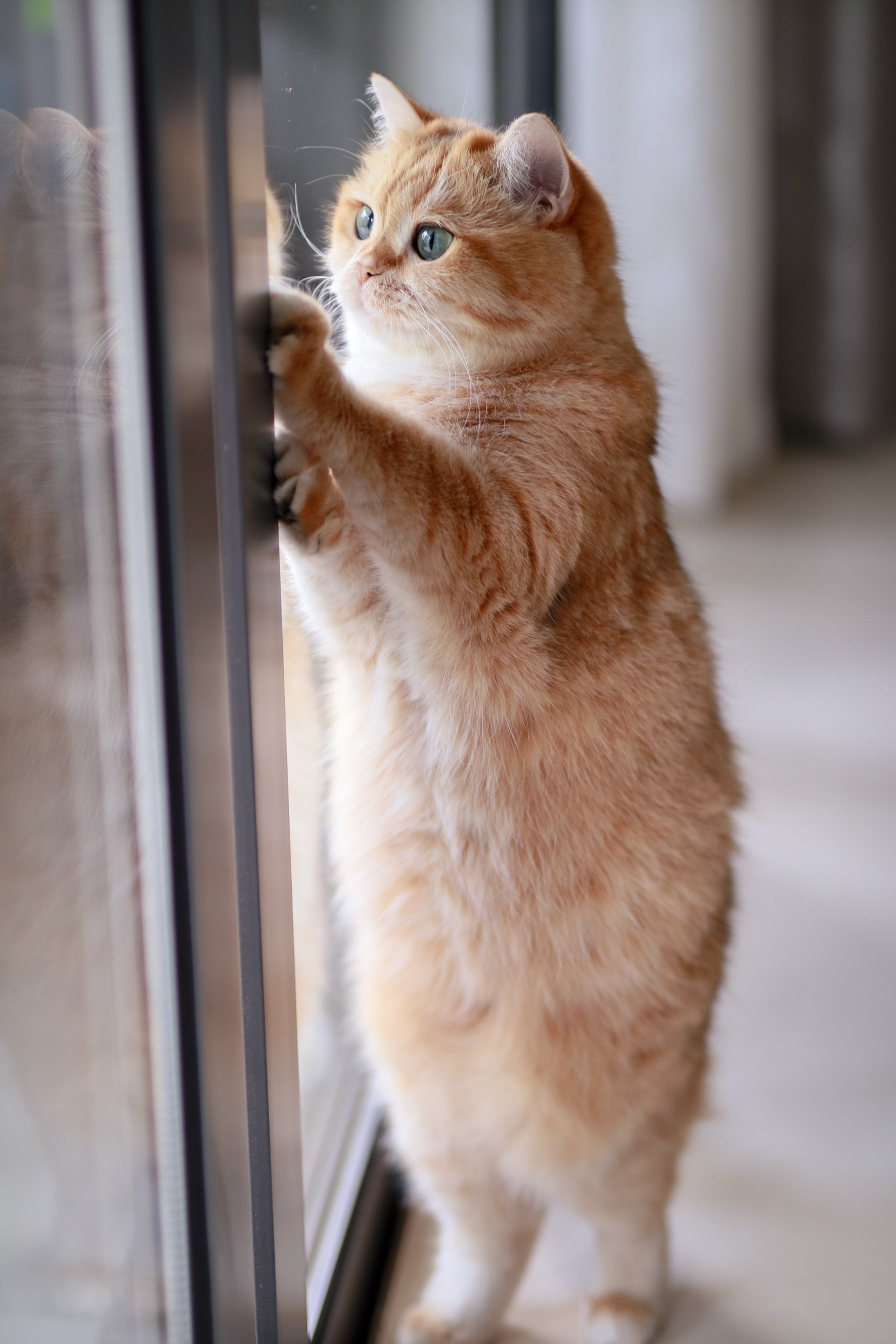 110755 download wallpaper Cat, Funny, Animals, Pet, Nice, Sweetheart, Redhead screensavers and pictures for free