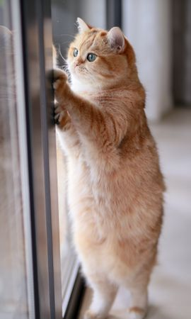 110755 Screensavers and Wallpapers Funny for phone. Download Animals, Cat, Redhead, Funny, Nice, Sweetheart, Pet pictures for free
