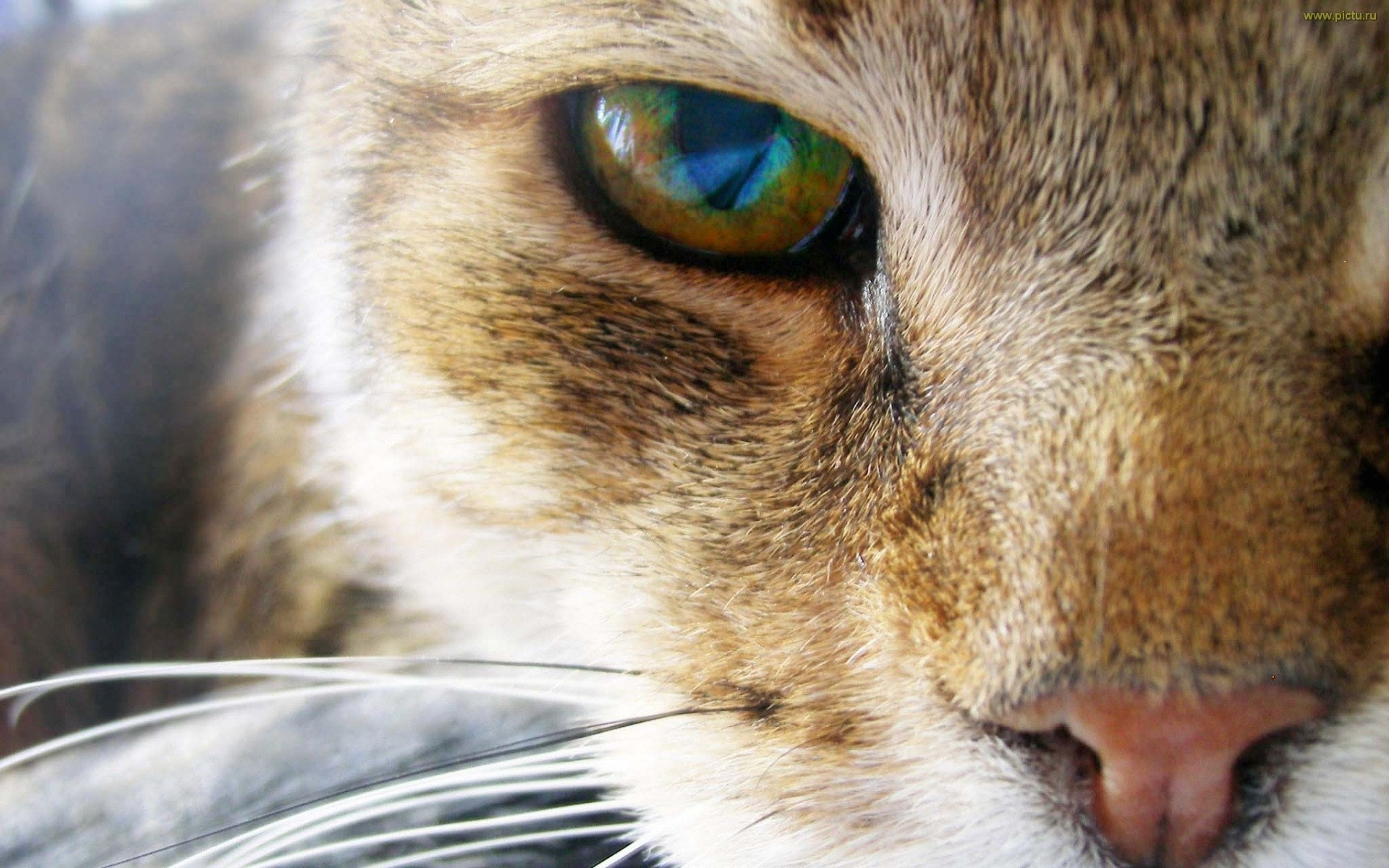 4070 download wallpaper Animals, Cats screensavers and pictures for free