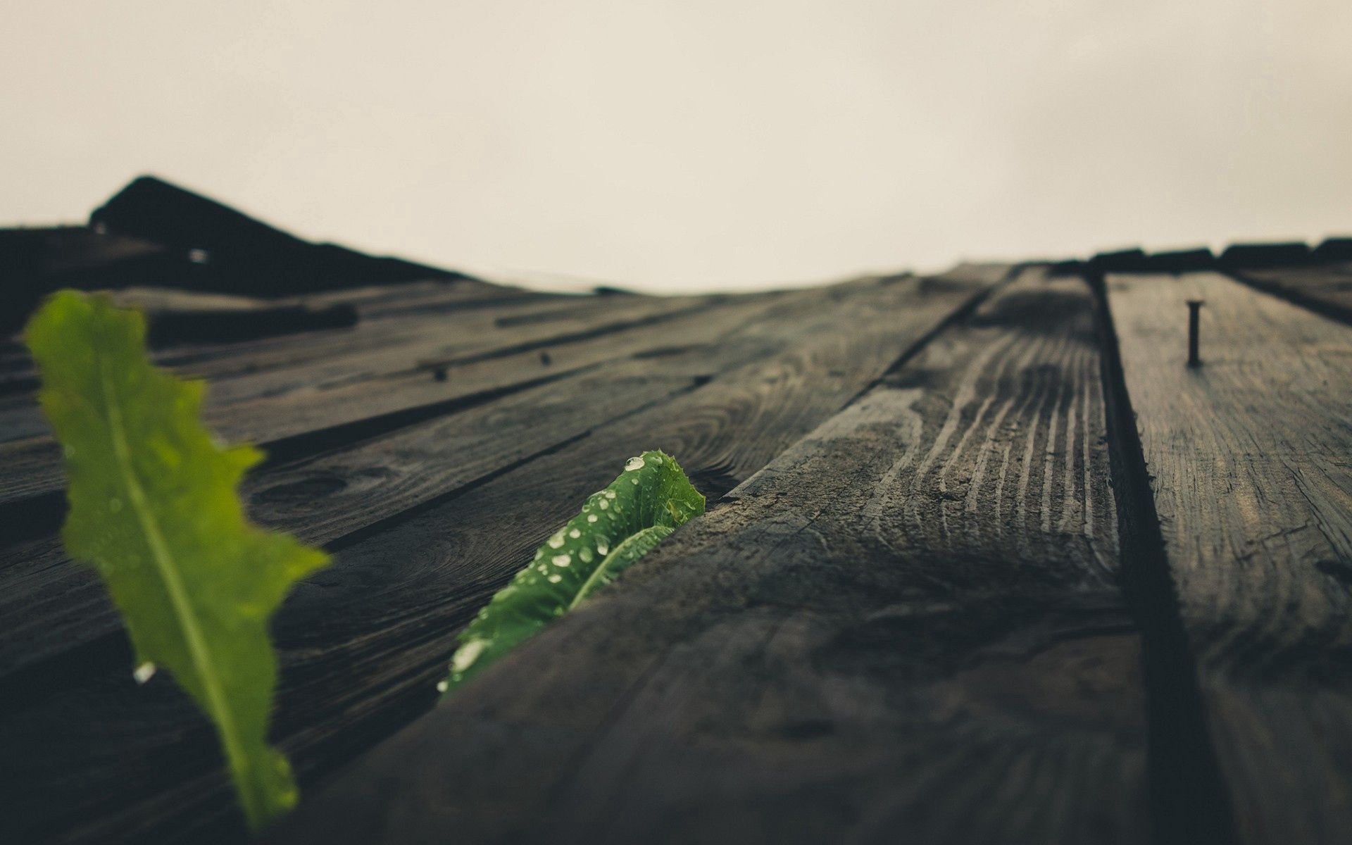 76736 Screensavers and Wallpapers Wooden for phone. Download Macro, Wood, Wooden, Surface pictures for free