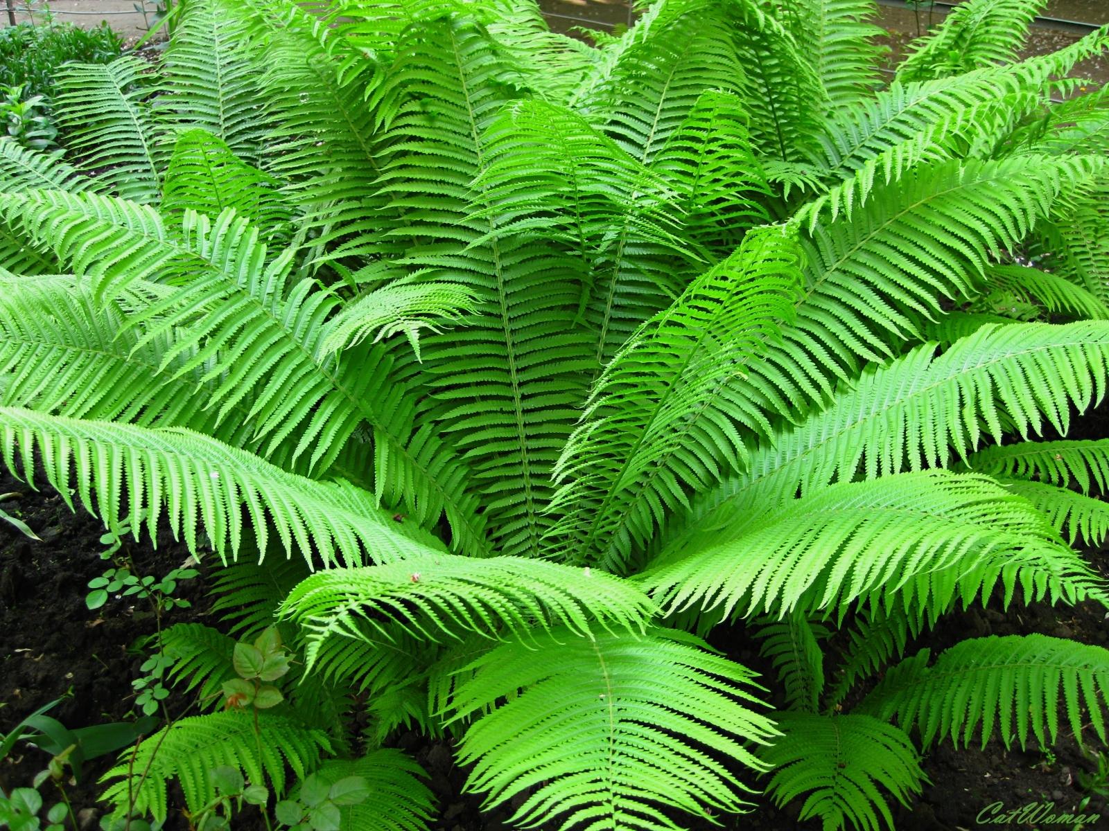 8528 Hintergrundbild herunterladen Pflanzen, Farne - Bildschirmschoner und Bilder kostenlos