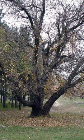 632 скачать обои Пейзаж, Деревья, Осень - заставки и картинки бесплатно