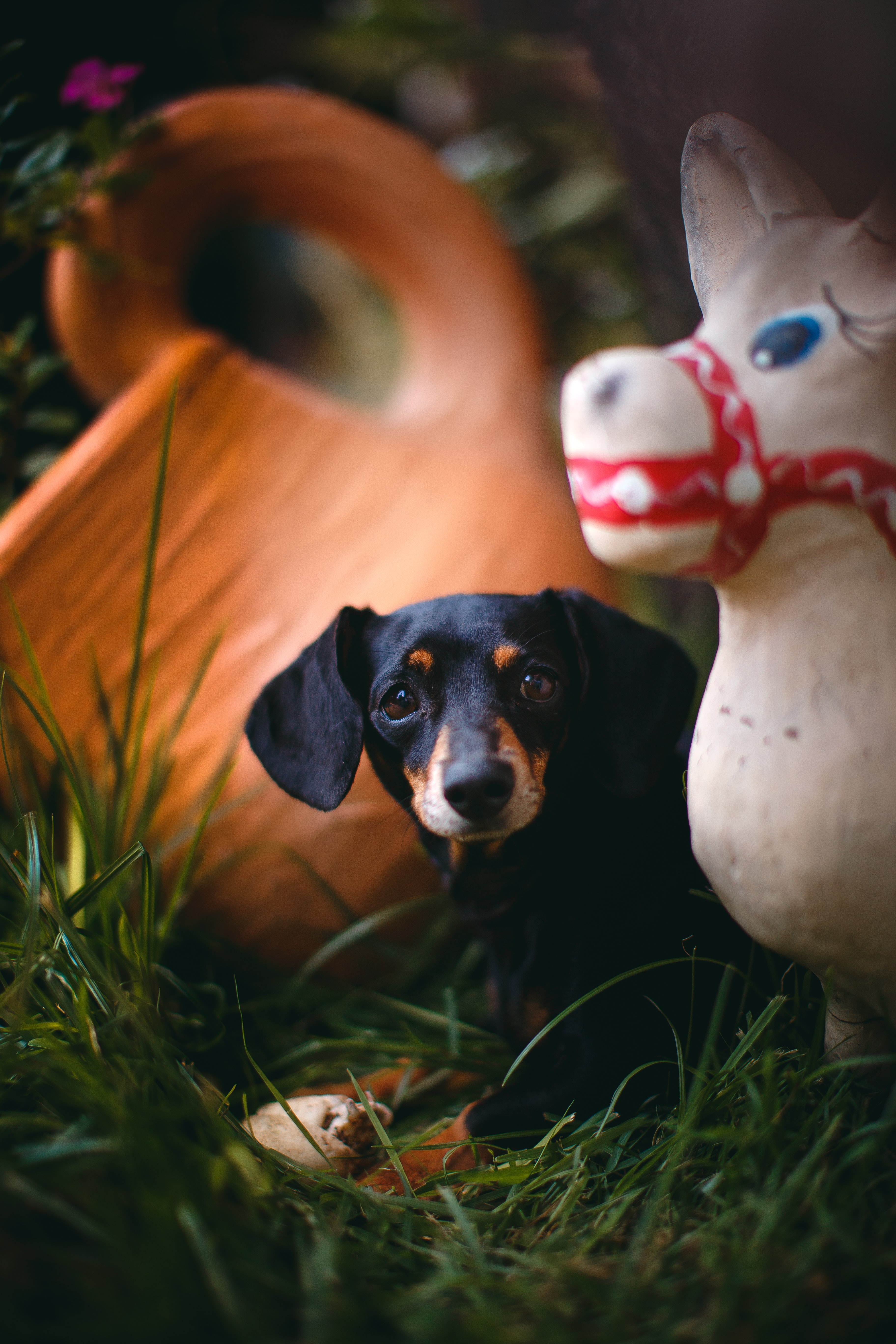 81129 download wallpaper Animals, Dachshund, Puppy, Nice, Sweetheart, Grass screensavers and pictures for free
