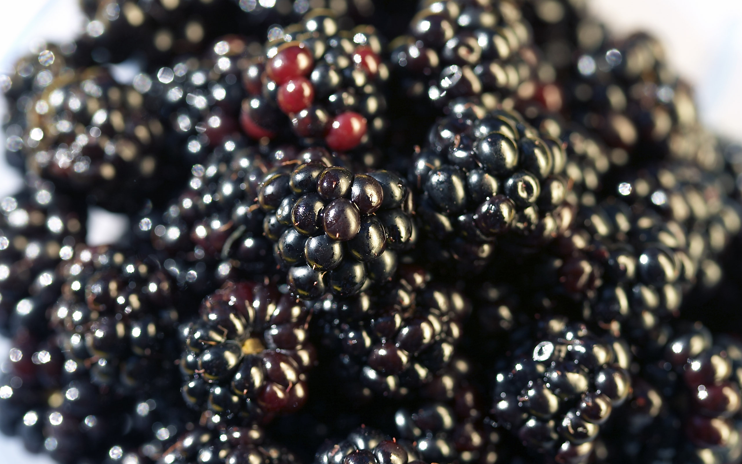 10834 download wallpaper Fruits, Food, Background, Berries, Blackberry screensavers and pictures for free