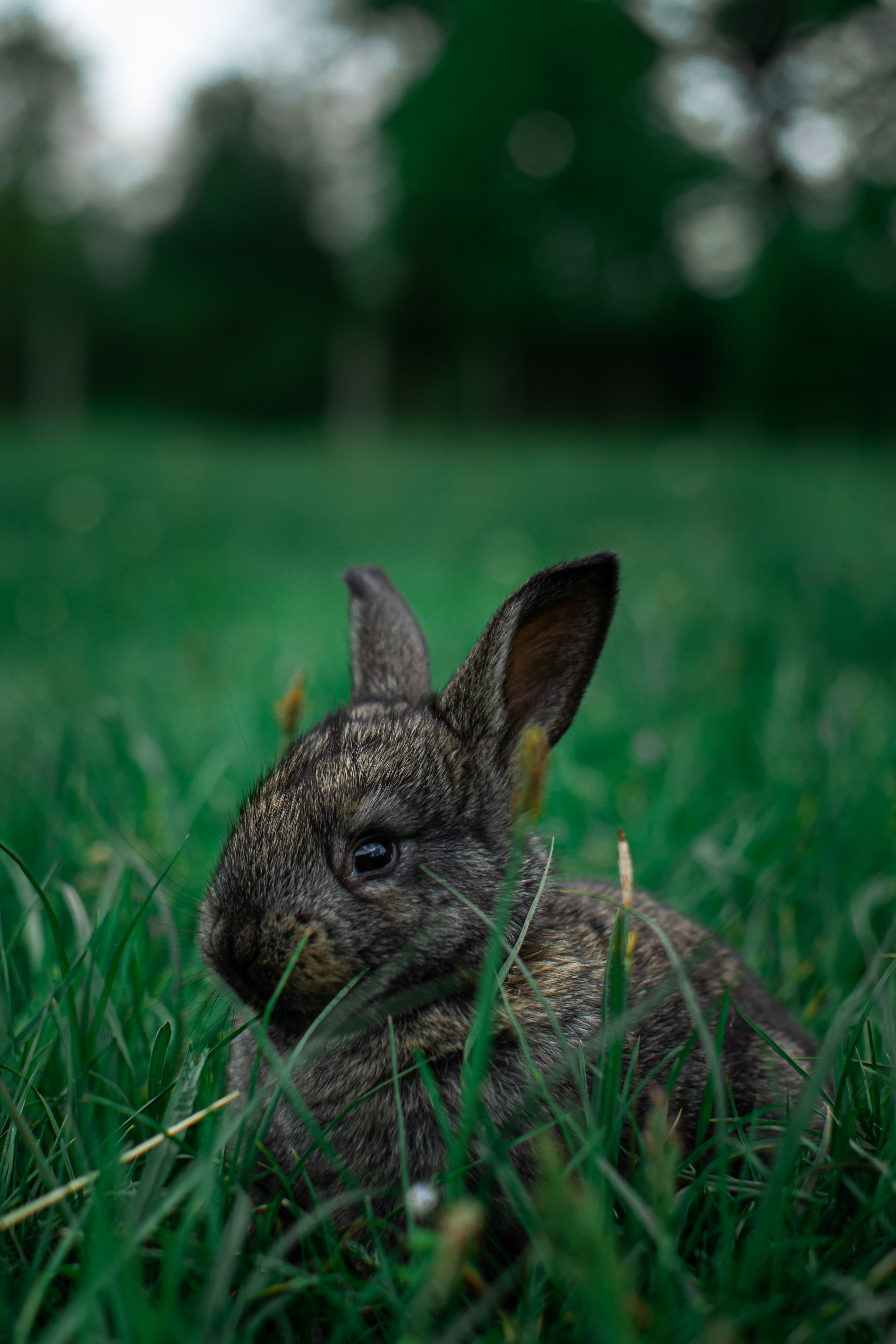 99249 download wallpaper Animals, Rabbit, Animal, Grass screensavers and pictures for free