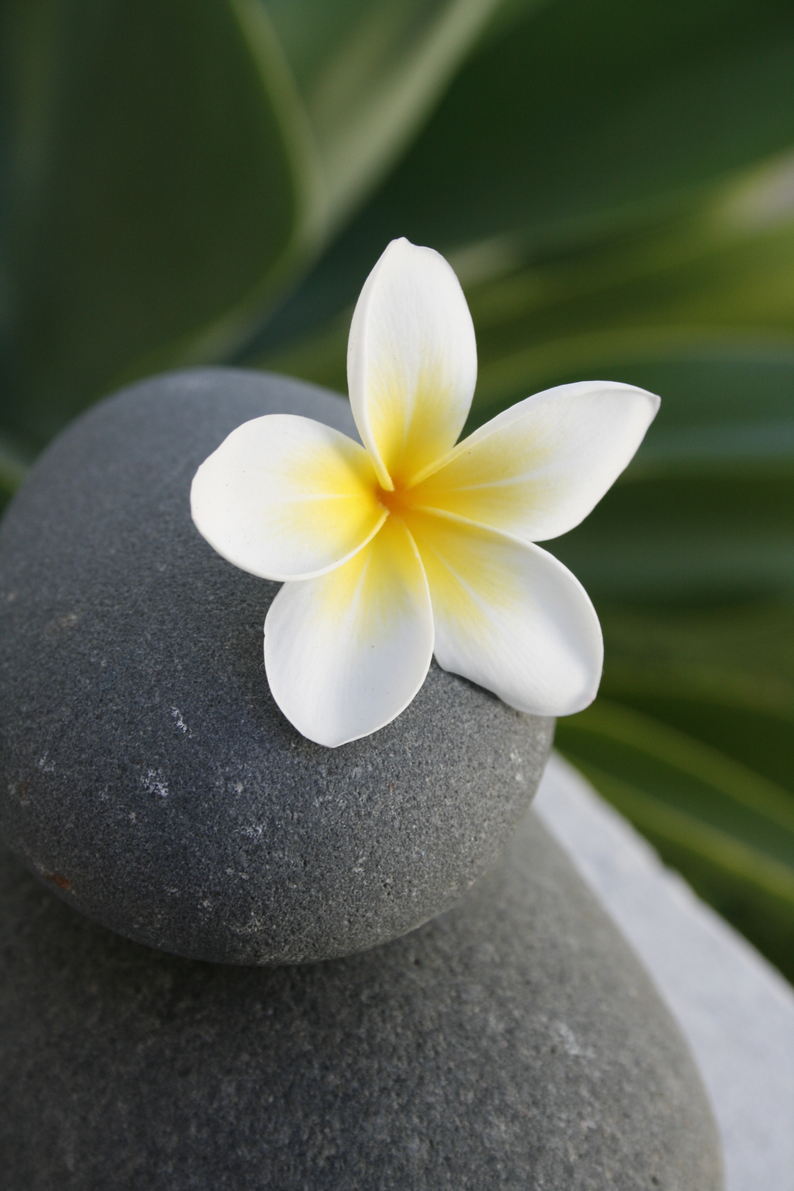 107095 download wallpaper Flowers, Rock, Balance, Flower, Stone, Meditation screensavers and pictures for free