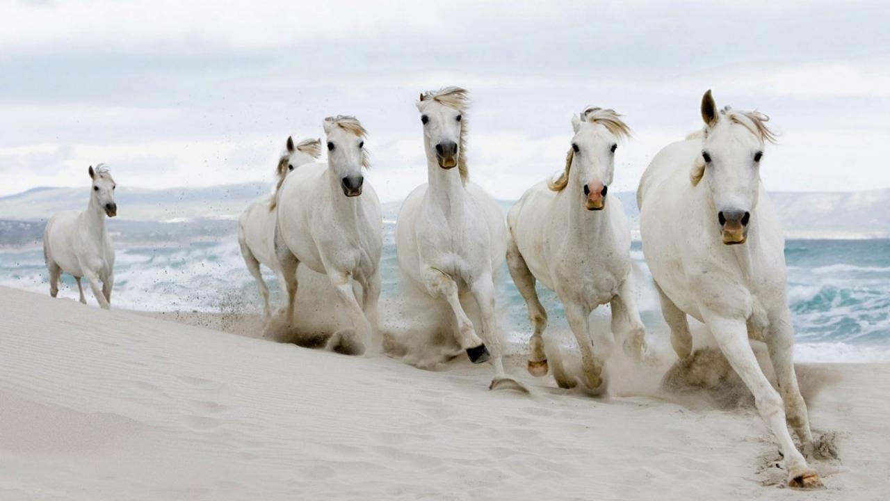 Завантажити безкоштовно картинку 35379: Тварини, Коні шпалери на телефон