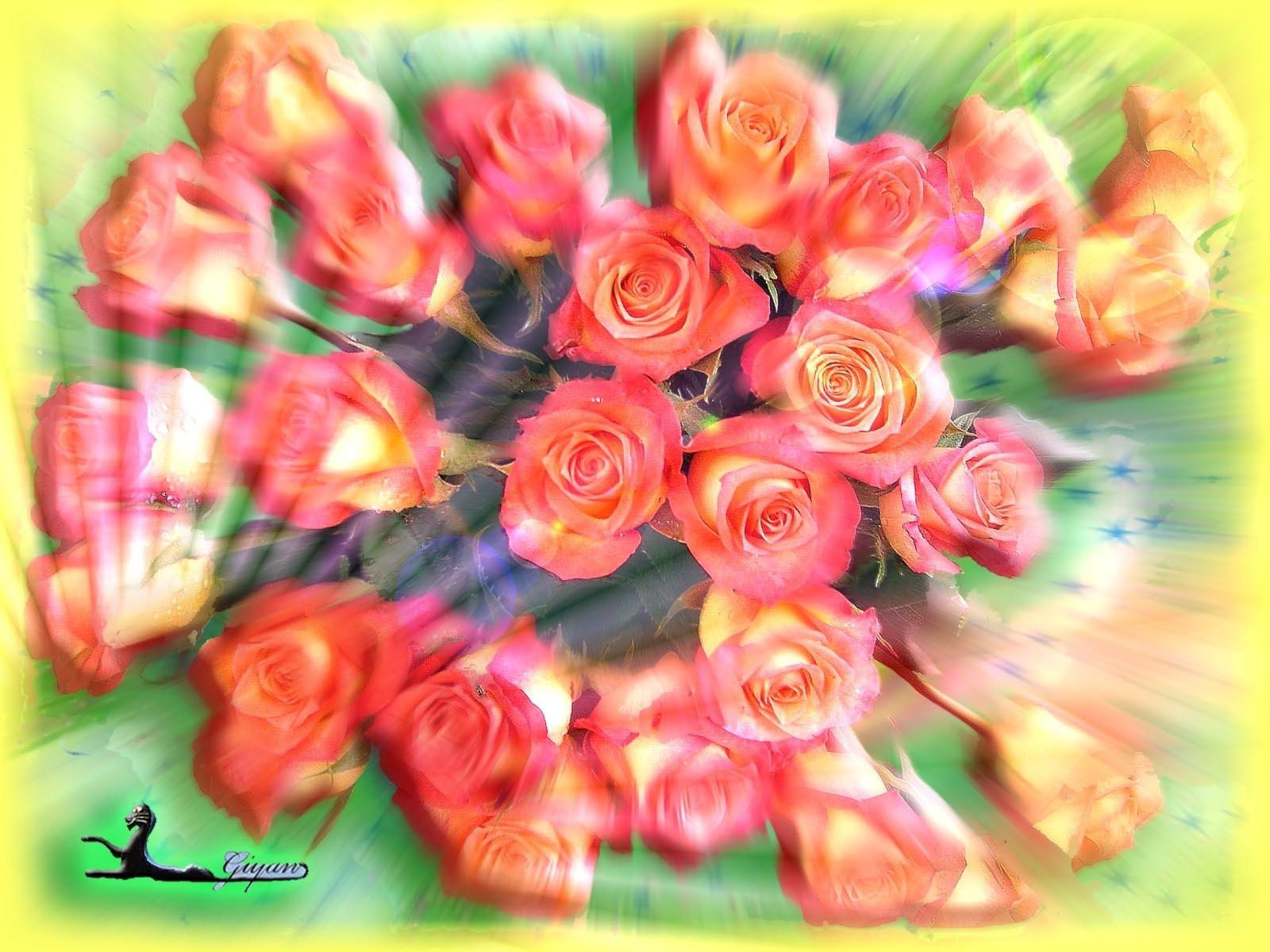 3079 скачать обои Растения, Цветы, Розы - заставки и картинки бесплатно