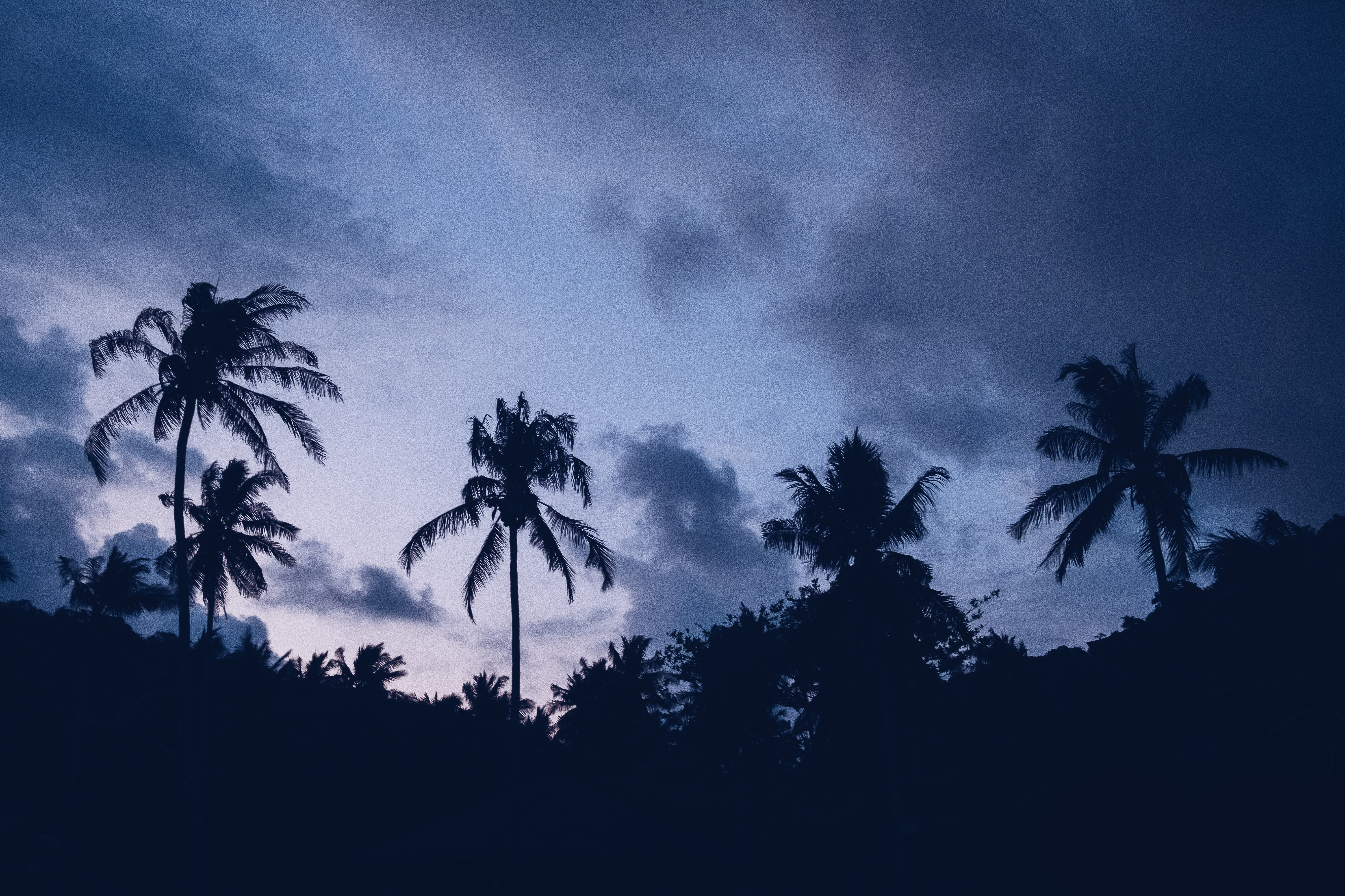 145779 download wallpaper Dark, Night, Clouds, Palms screensavers and pictures for free