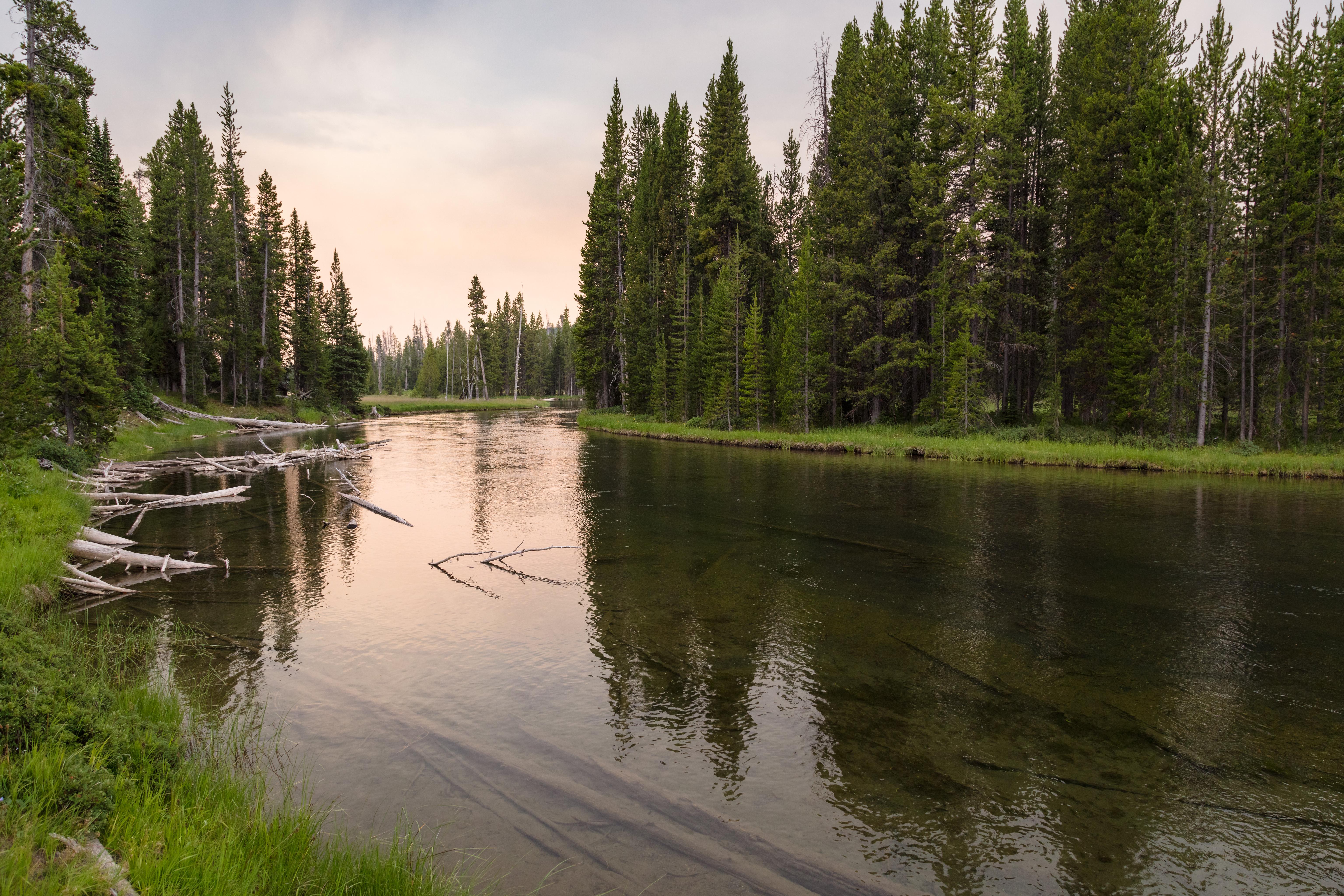 73220 скачать обои Природа, Река, Трава, Лес, Коряги - заставки и картинки бесплатно