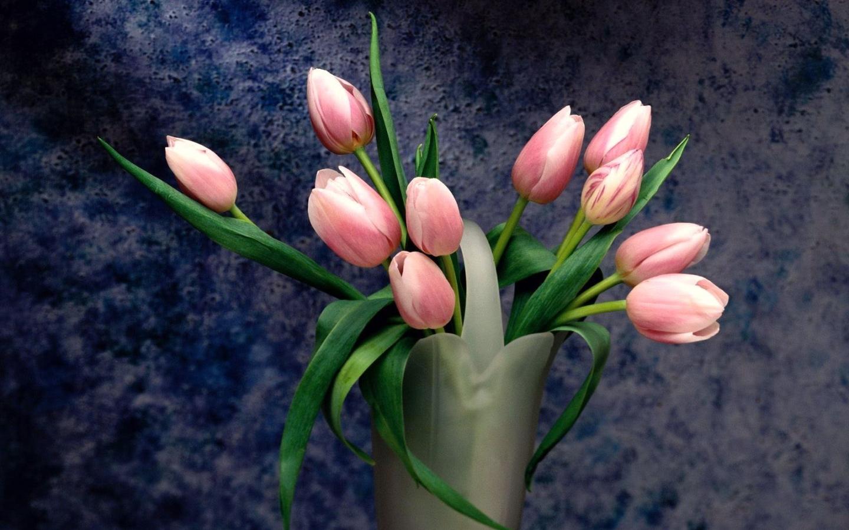 32727 скачать обои Растения, Цветы, Тюльпаны - заставки и картинки бесплатно