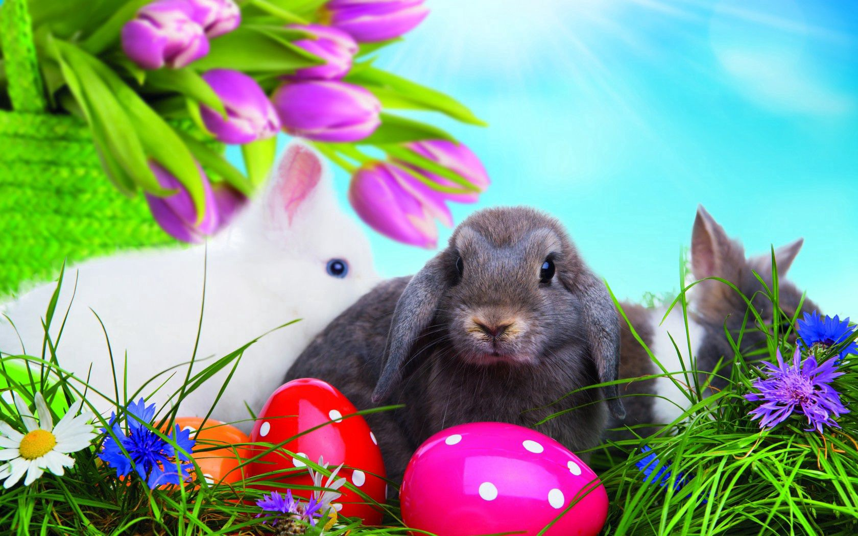 60587 download wallpaper Holidays, Grass, Eggs, Easter, Rabbits, Multicolored screensavers and pictures for free