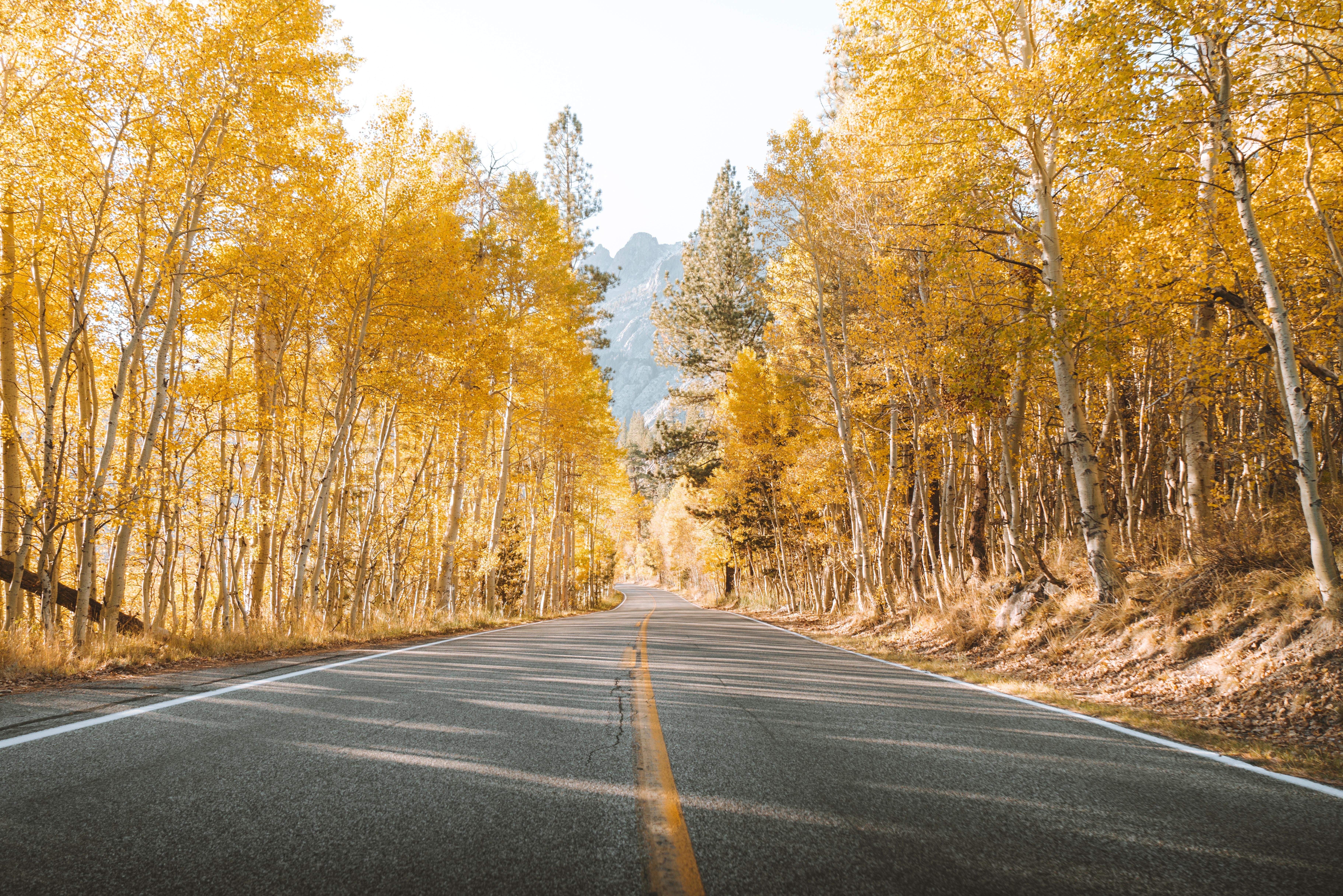 127379 скачать обои Природа, Дорога, Деревья, Осень, Асфальт, Пейзаж - заставки и картинки бесплатно