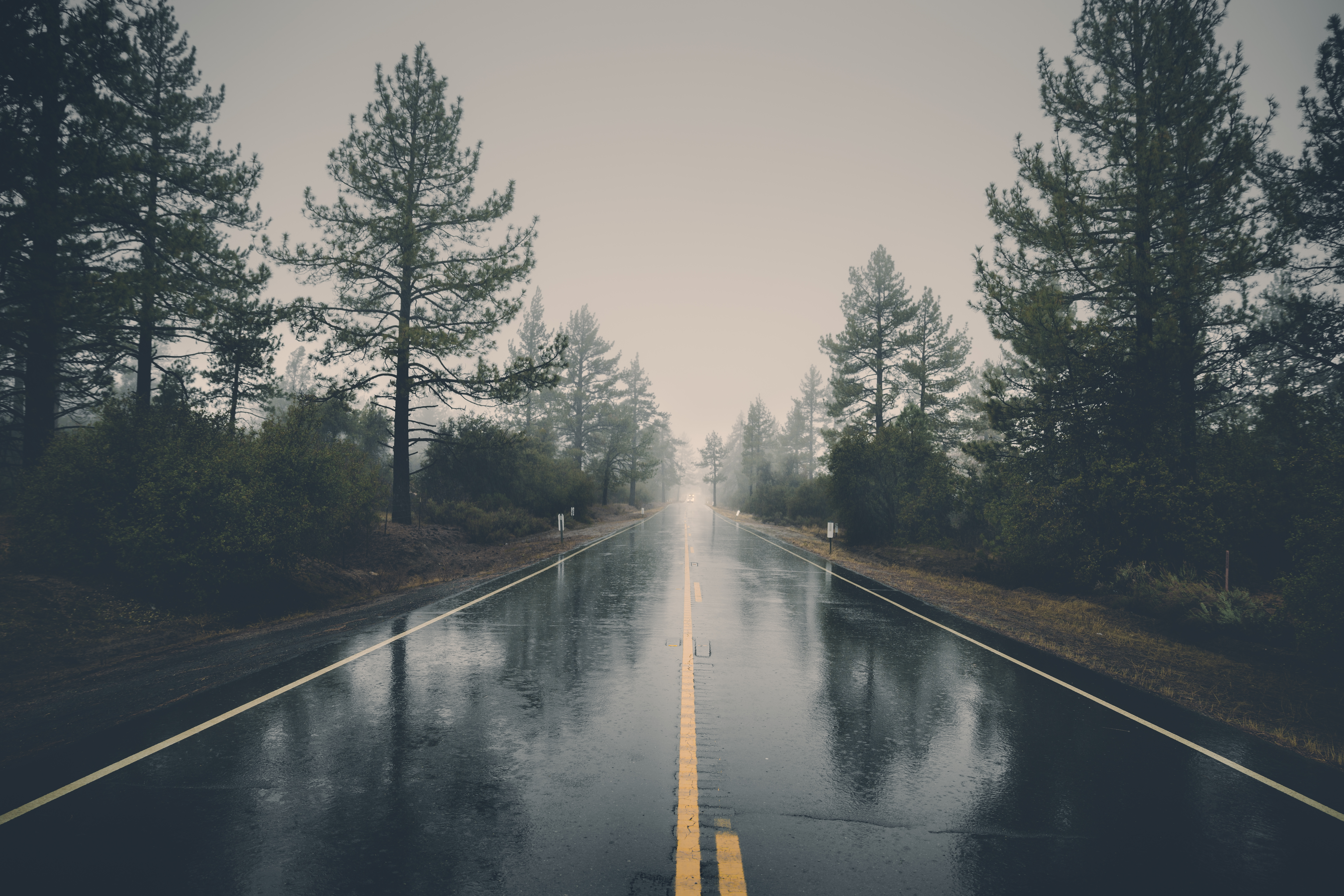 155267 Screensavers and Wallpapers Road for phone. Download Road, Nature, Trees, Rain, Bush, Wet, Asphalt pictures for free