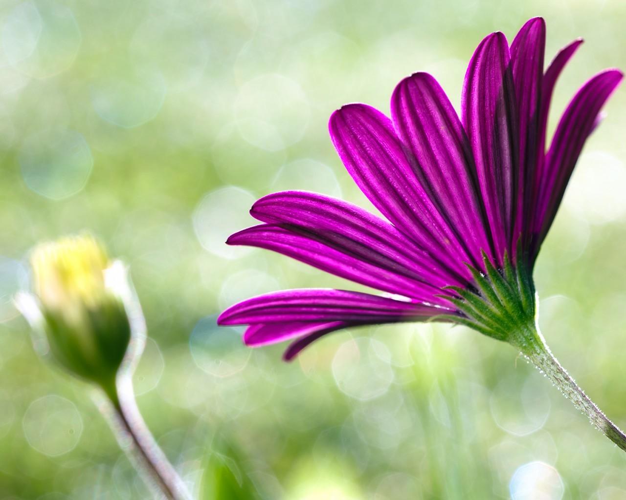19560 скачать обои Растения, Цветы - заставки и картинки бесплатно