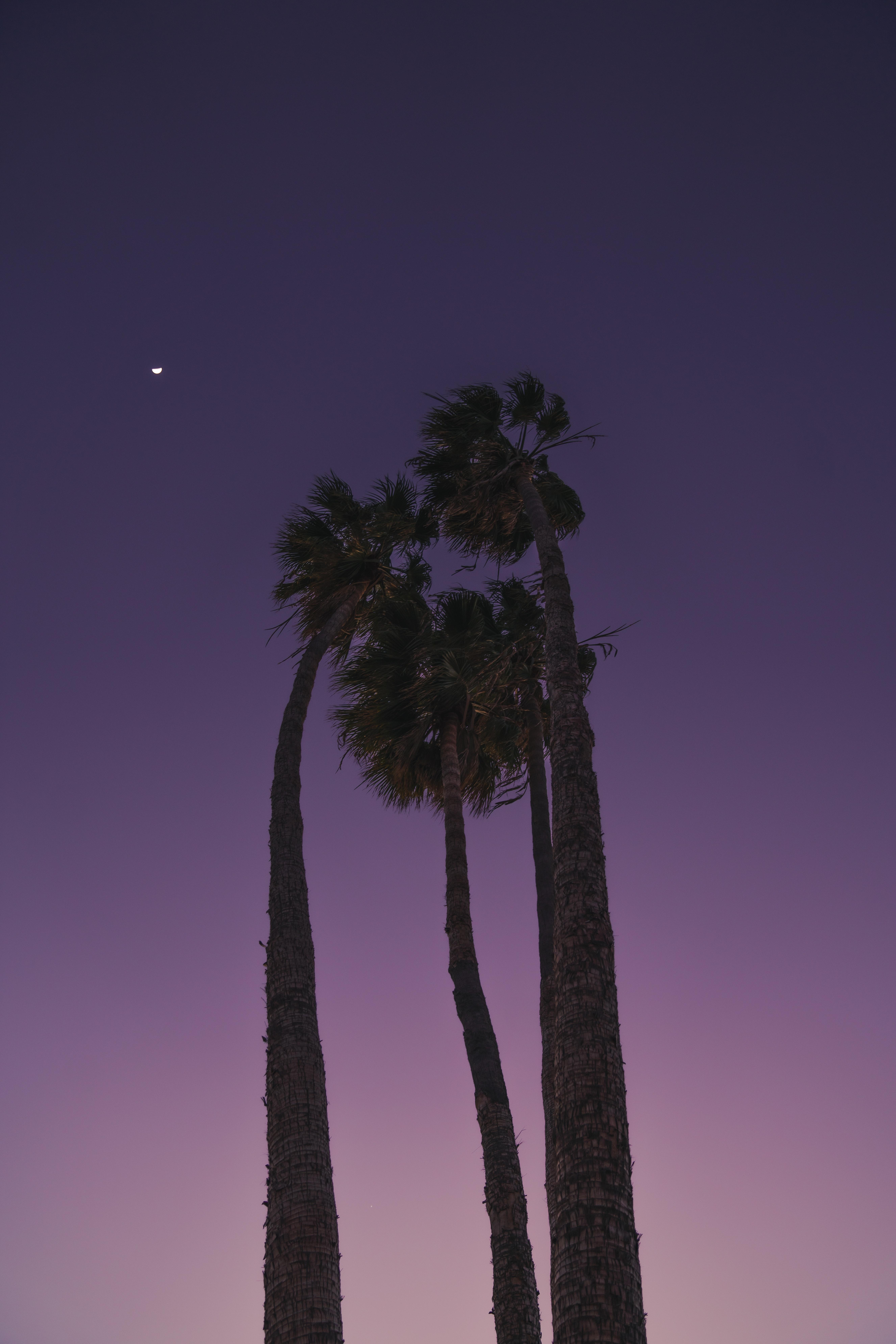 101674 免費下載壁紙 性质, 树, 底视图, 底部视图, 晚上, 月球, 棕榈 屏保和圖片