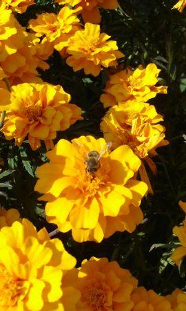 2814 descargar fondo de pantalla Plantas, Flores: protectores de pantalla e imágenes gratis
