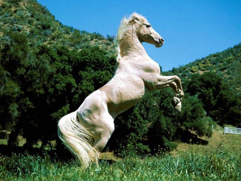 38459 Заставки и Обои Лошади на телефон. Скачать Лошади, Животные картинки бесплатно