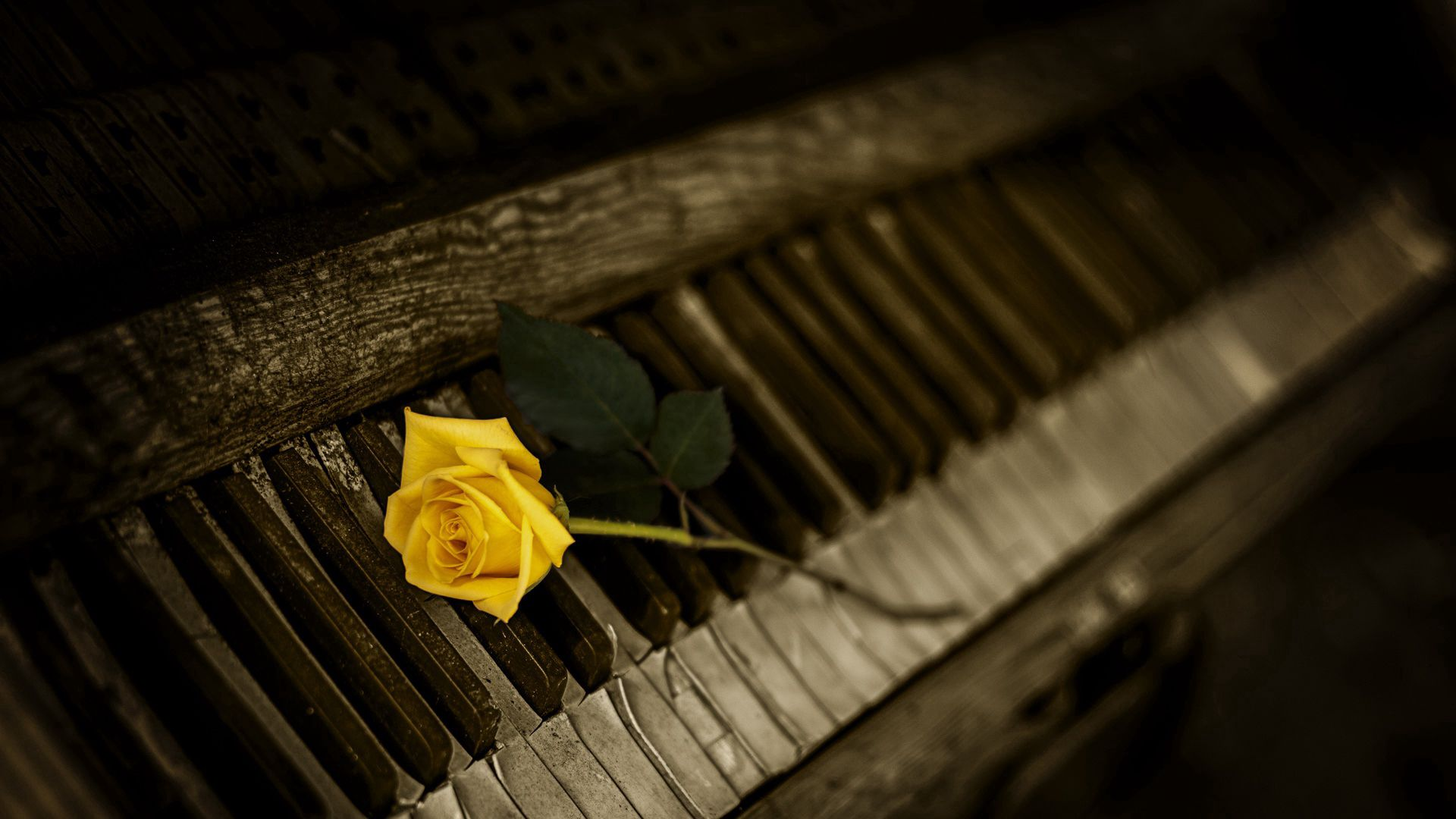 71983 download wallpaper Flowers, Piano, Rose Flower, Rose, Keys screensavers and pictures for free