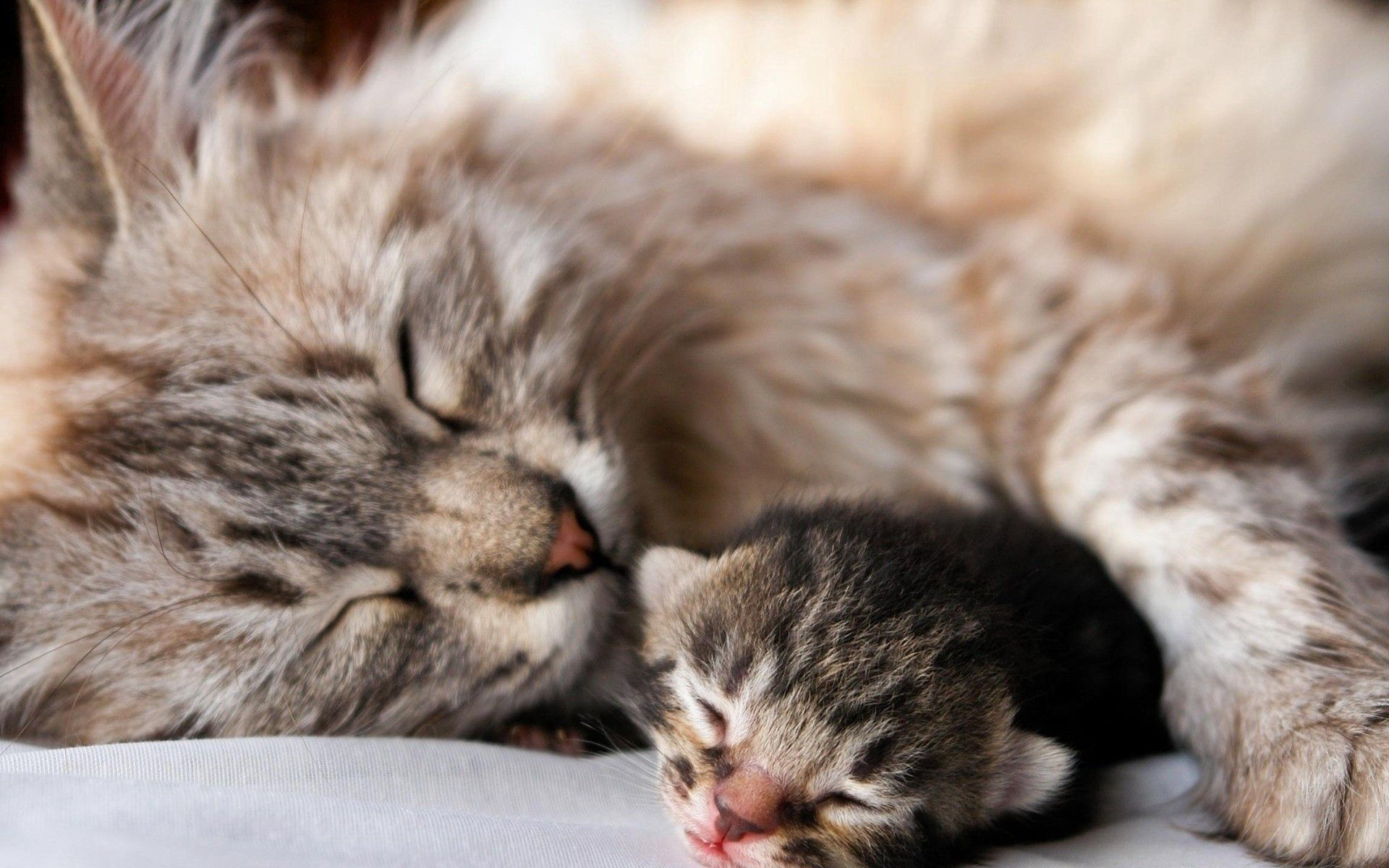72474 download wallpaper Animals, Cat, Kitty, Kitten, Sleep, Dream, Couple, Pair, Tenderness, Young, Joey screensavers and pictures for free