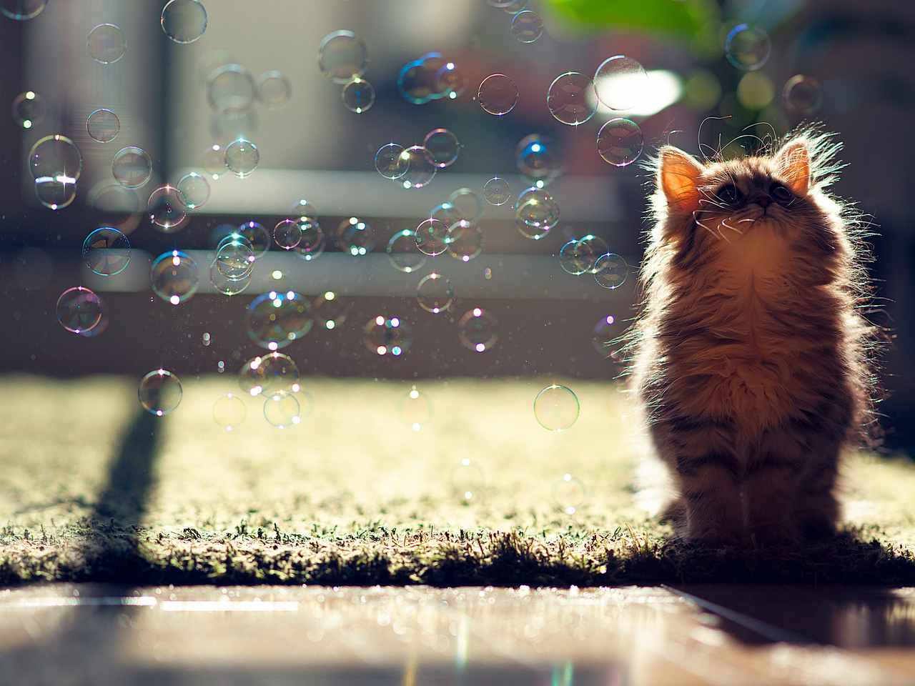 14712 download wallpaper Animals, Cats, Bubbles screensavers and pictures for free