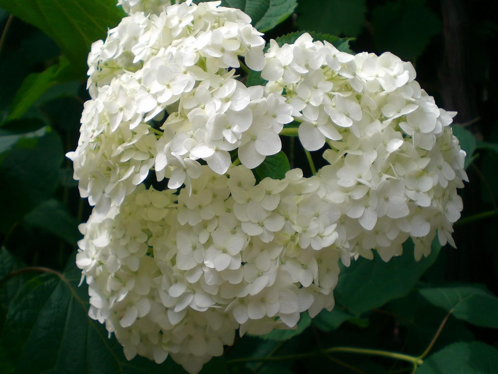 3695 скачать обои Растения, Цветы - заставки и картинки бесплатно