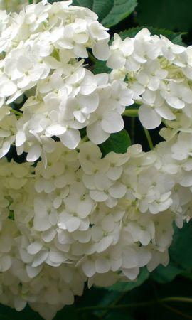 3695 descargar fondo de pantalla Plantas, Flores: protectores de pantalla e imágenes gratis