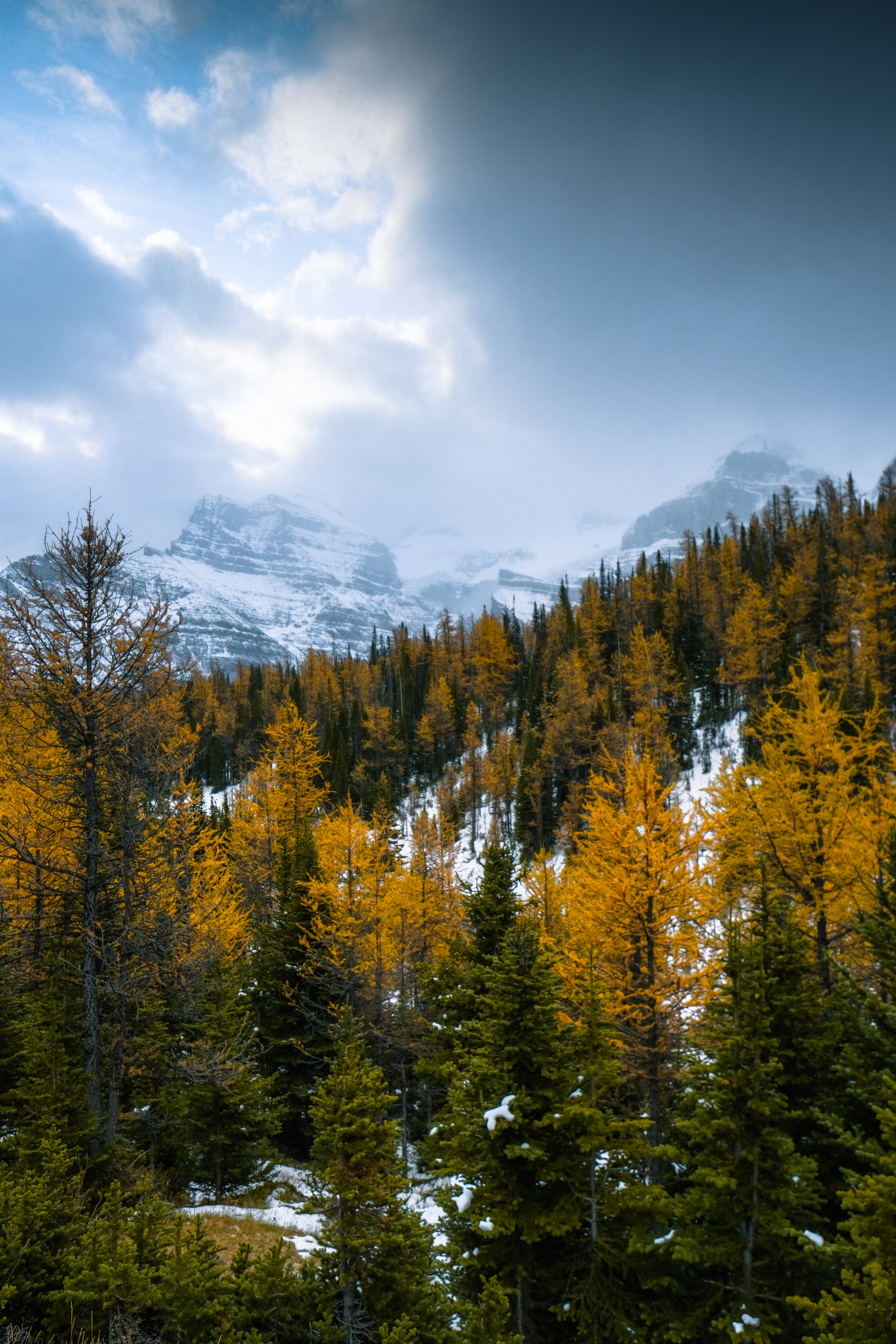 50804 download wallpaper Nature, Forest, Snow, Snow Covered, Snowbound, Mountains, Landscape screensavers and pictures for free