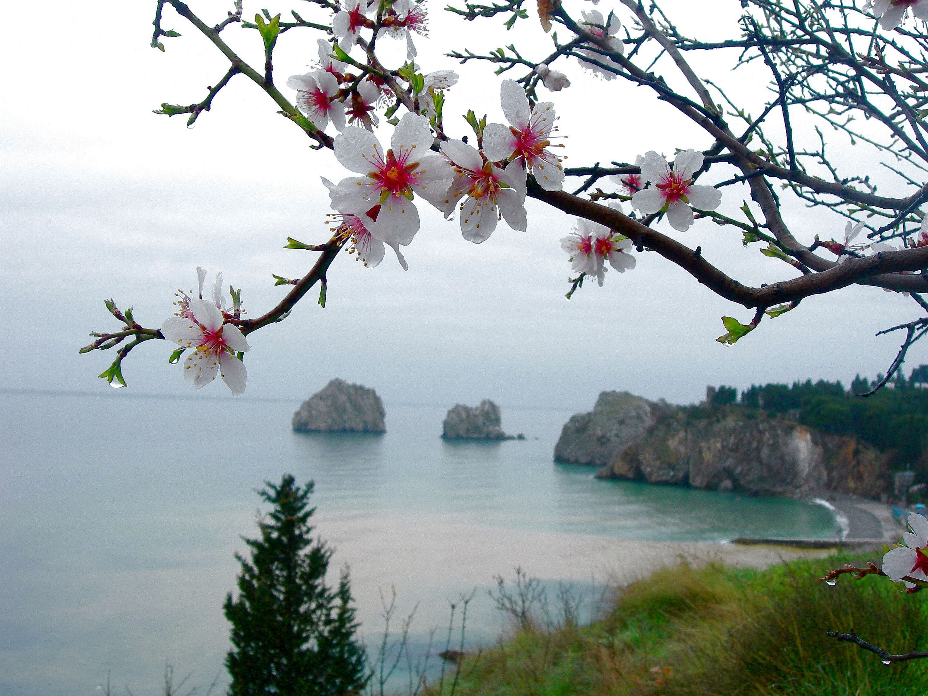Скачать картинку Вишня, Пейзаж, Море в телефон бесплатно.