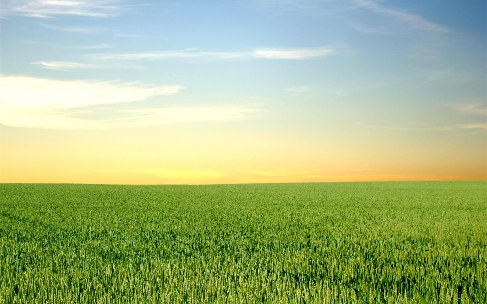 175 скачать обои Пейзаж, Трава, Поля, Небо - заставки и картинки бесплатно