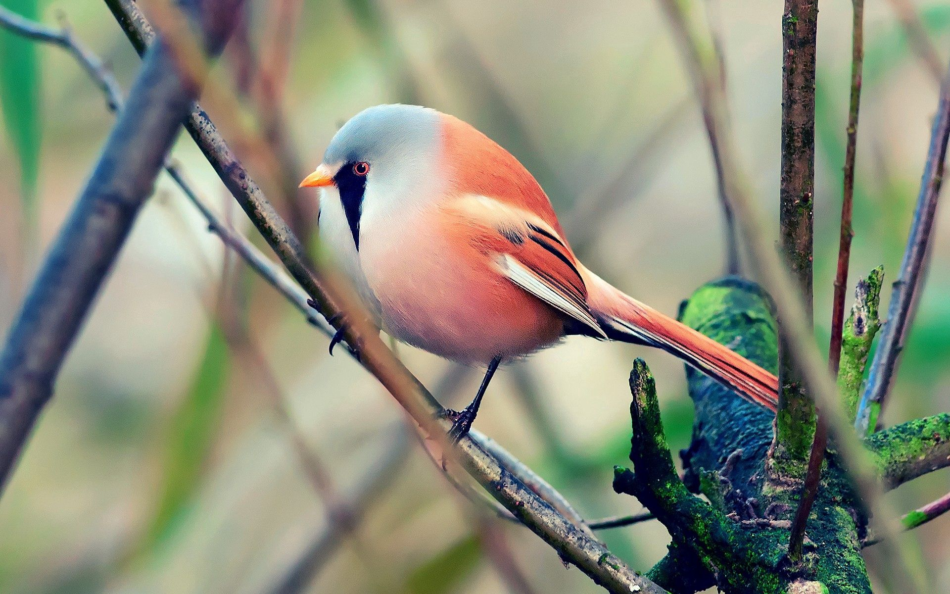 136971 download wallpaper Color, Animals, Bird, Sit, Beautiful screensavers and pictures for free