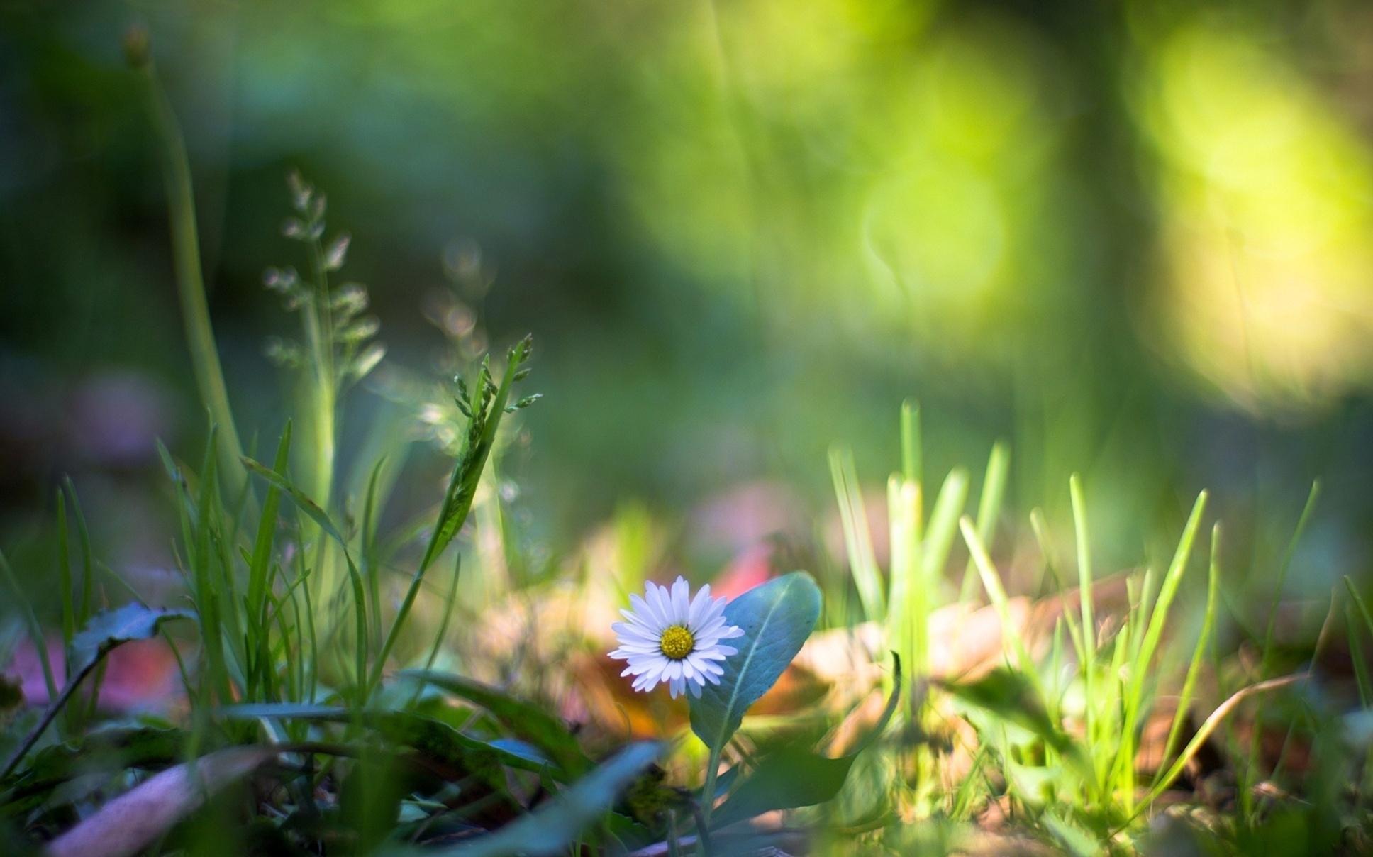 97863 скачать обои Макро, Природа, Растения, Цветок, Трава - заставки и картинки бесплатно