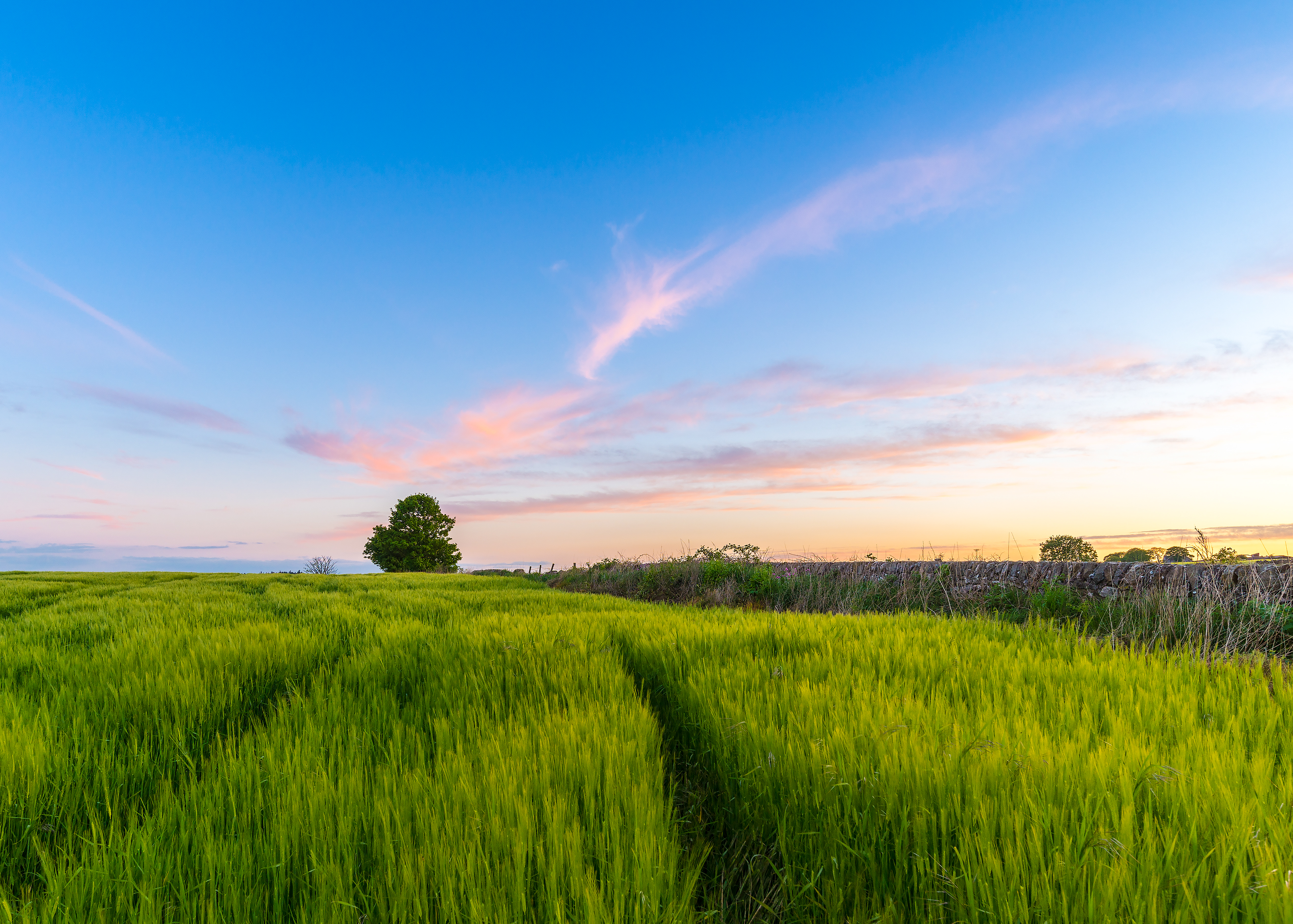 65267 Screensavers and Wallpapers Summer for phone. Download Nature, Grass, Sky, Summer, Wood, Tree, Field pictures for free