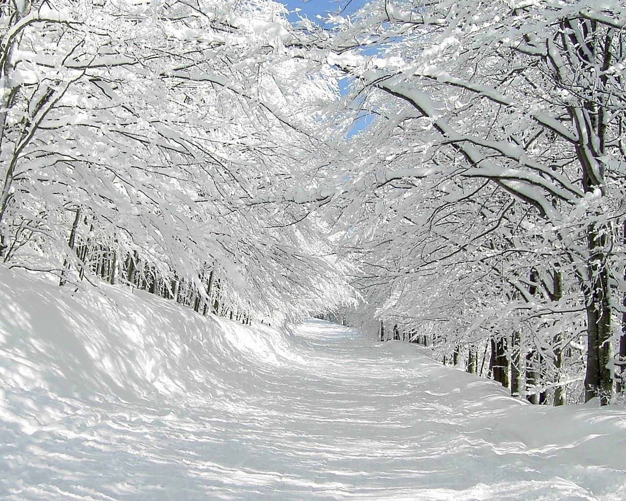 43045 download wallpaper Landscape, Winter screensavers and pictures for free