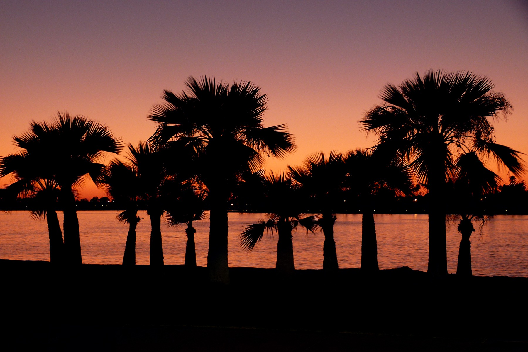 128685 download wallpaper Dark, San Diego, California, Night, Palms screensavers and pictures for free
