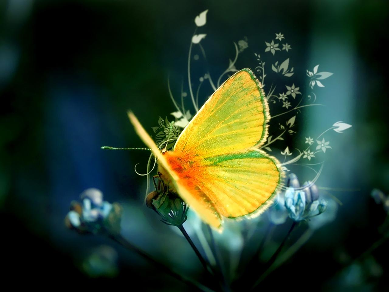 34593 descargar fondo de pantalla Mariposas, Insectos: protectores de pantalla e imágenes gratis