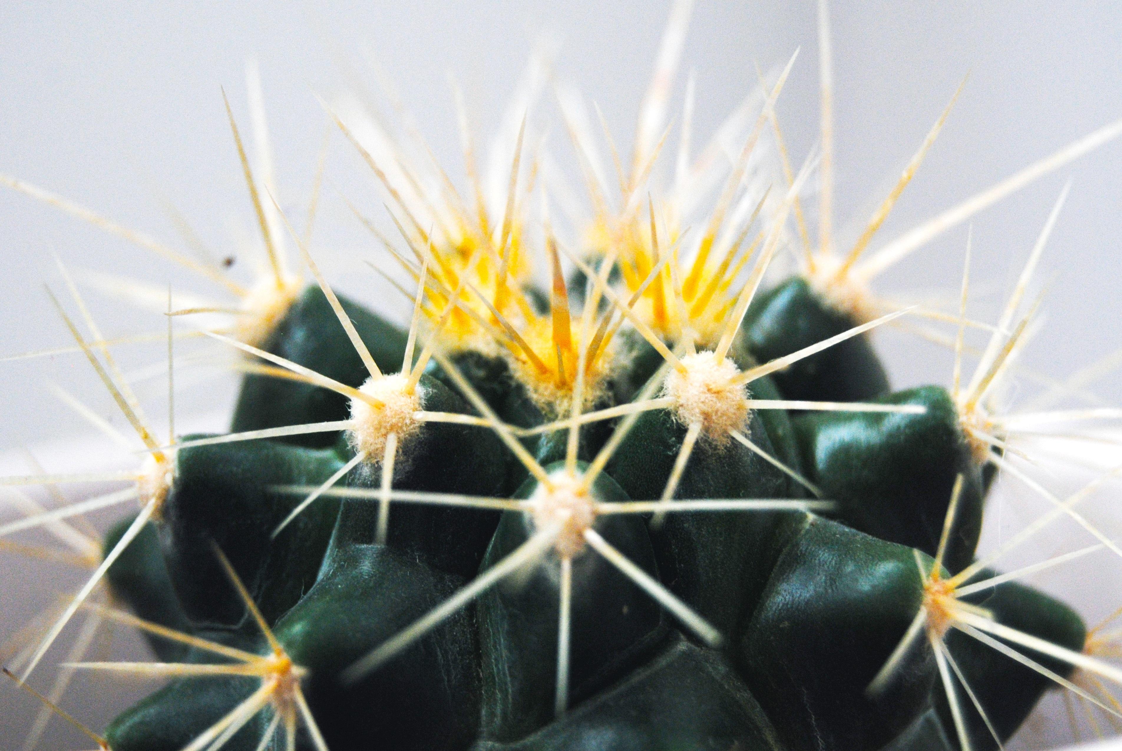 67713 descargar fondo de pantalla Macro, Cactus, Cacto, Espinas, Espigas, Suculento: protectores de pantalla e imágenes gratis